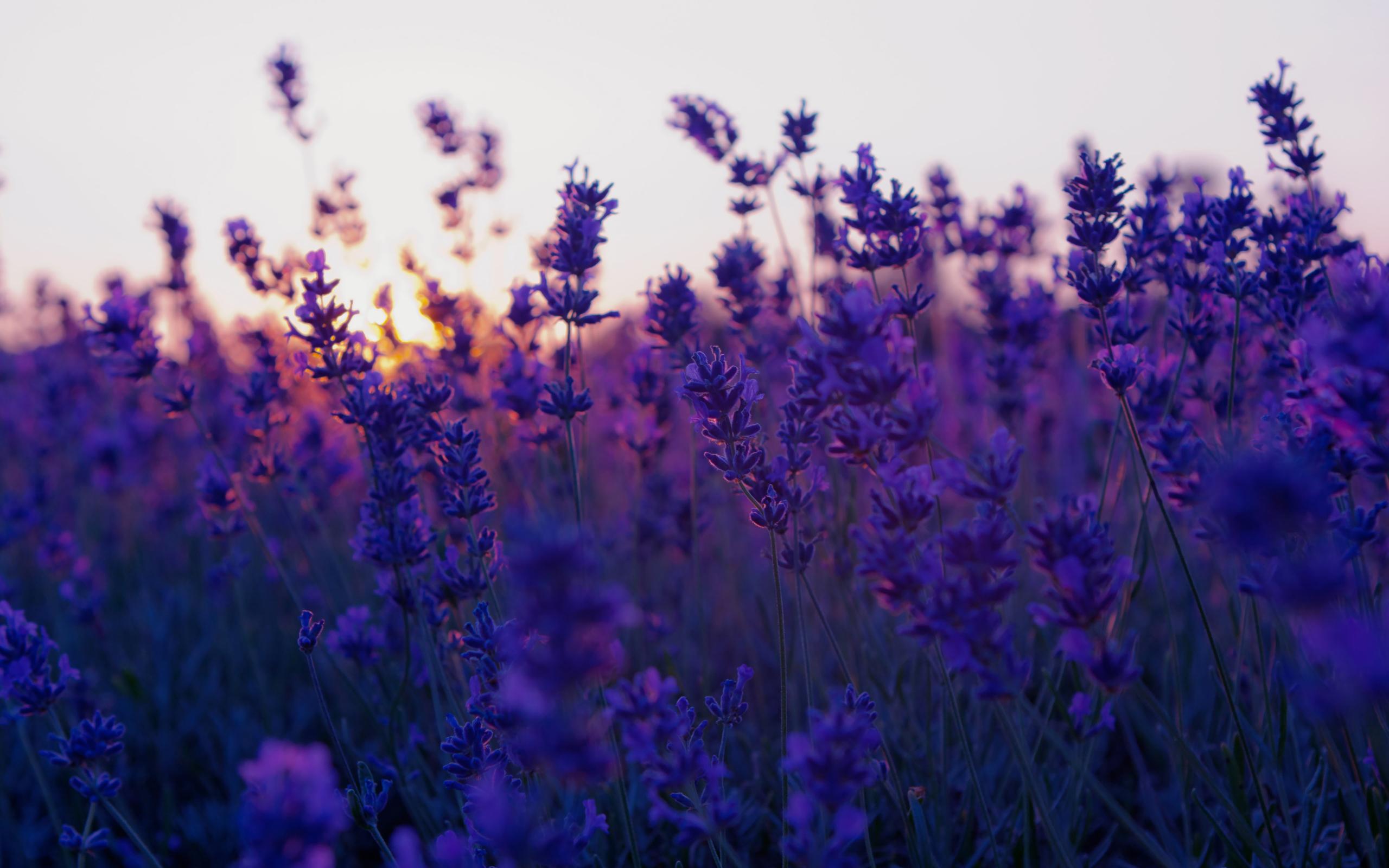 природа цветы фиолетовые трава nature flowers purple grass скачать
