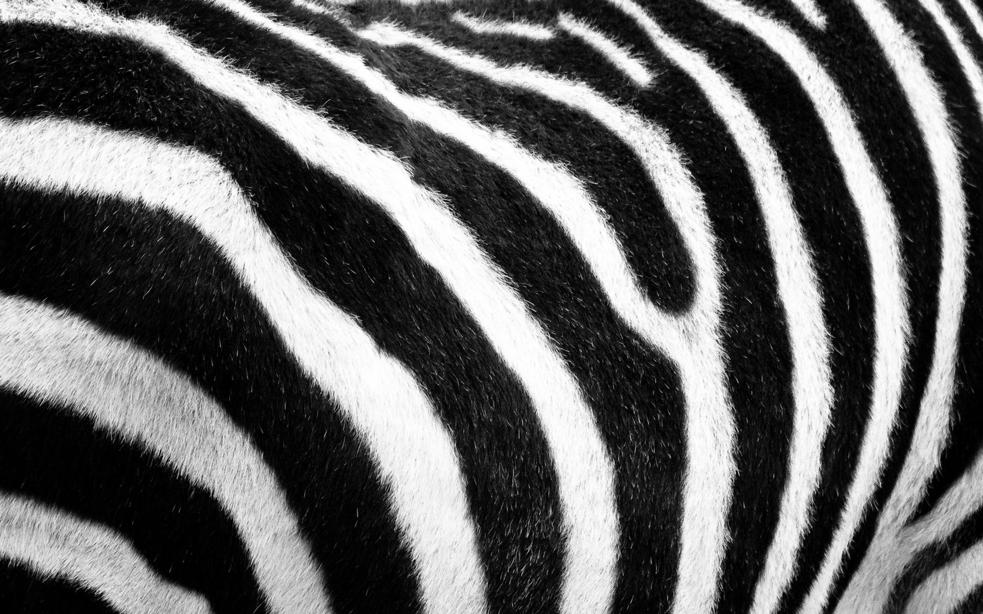 Поздравление для, открытка полосатая зебра