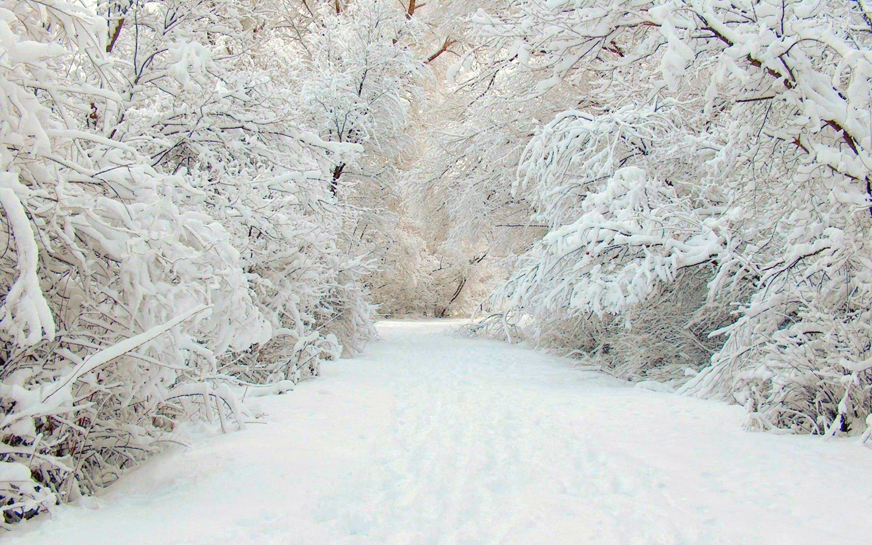 фотографии про снег название получил