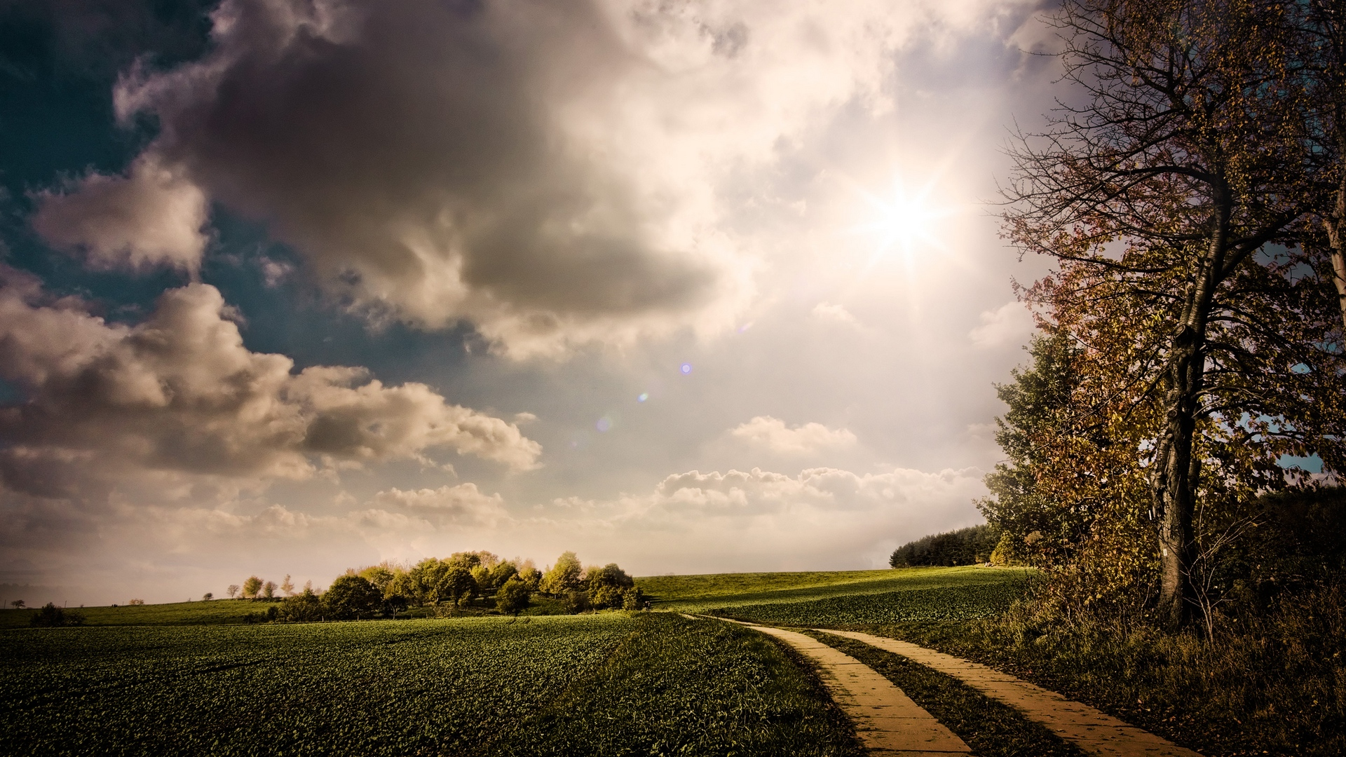дорога, солнце, трава, деревья онлайн
