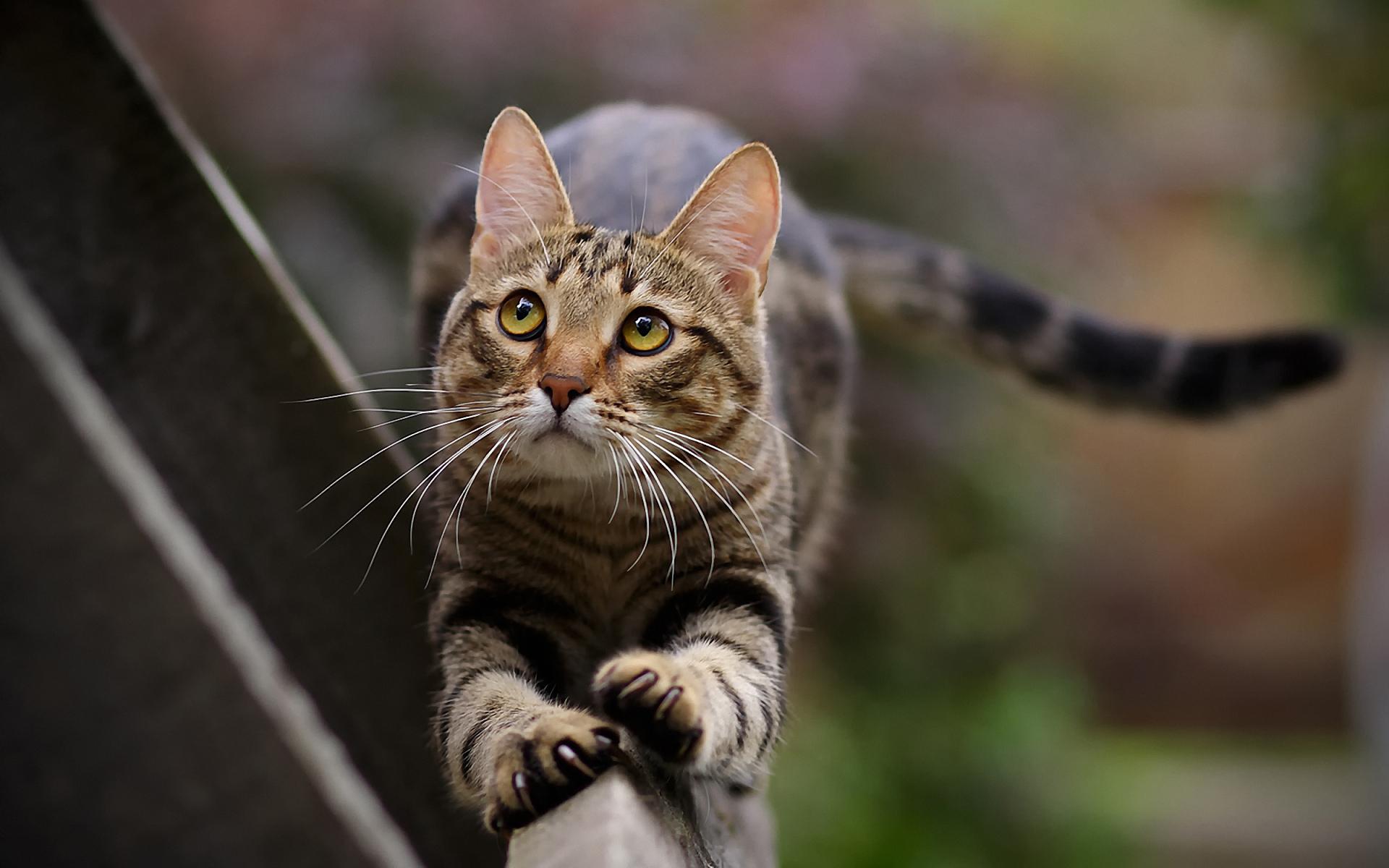Кошка с розовыми когтями скачать