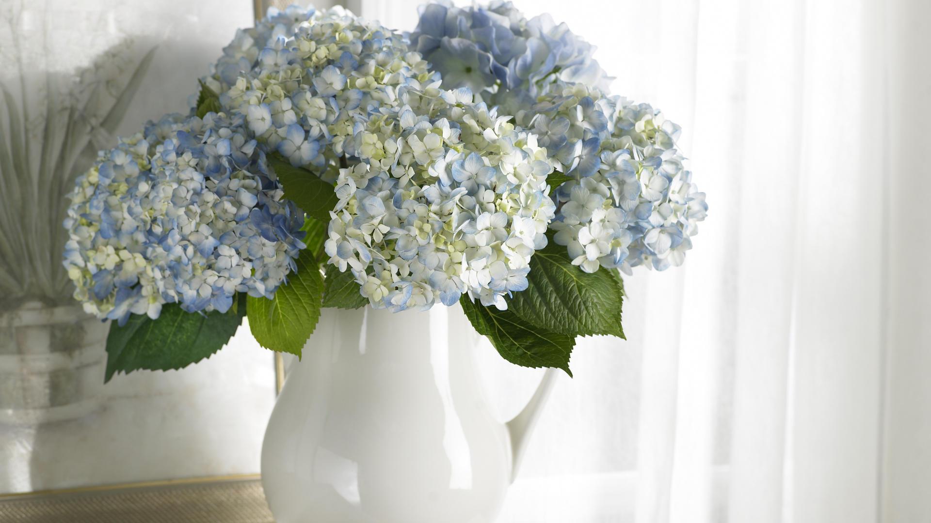 белые цветы ваза загрузить