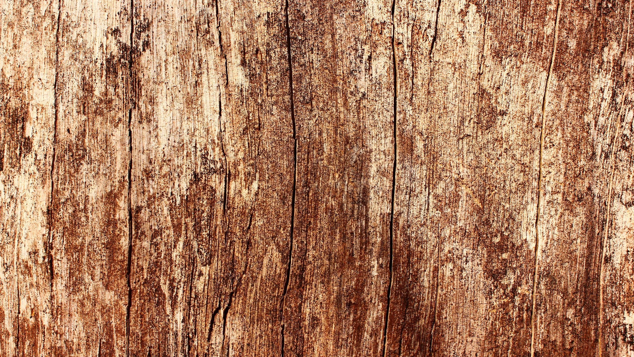 Срезанное дерево бесплатно