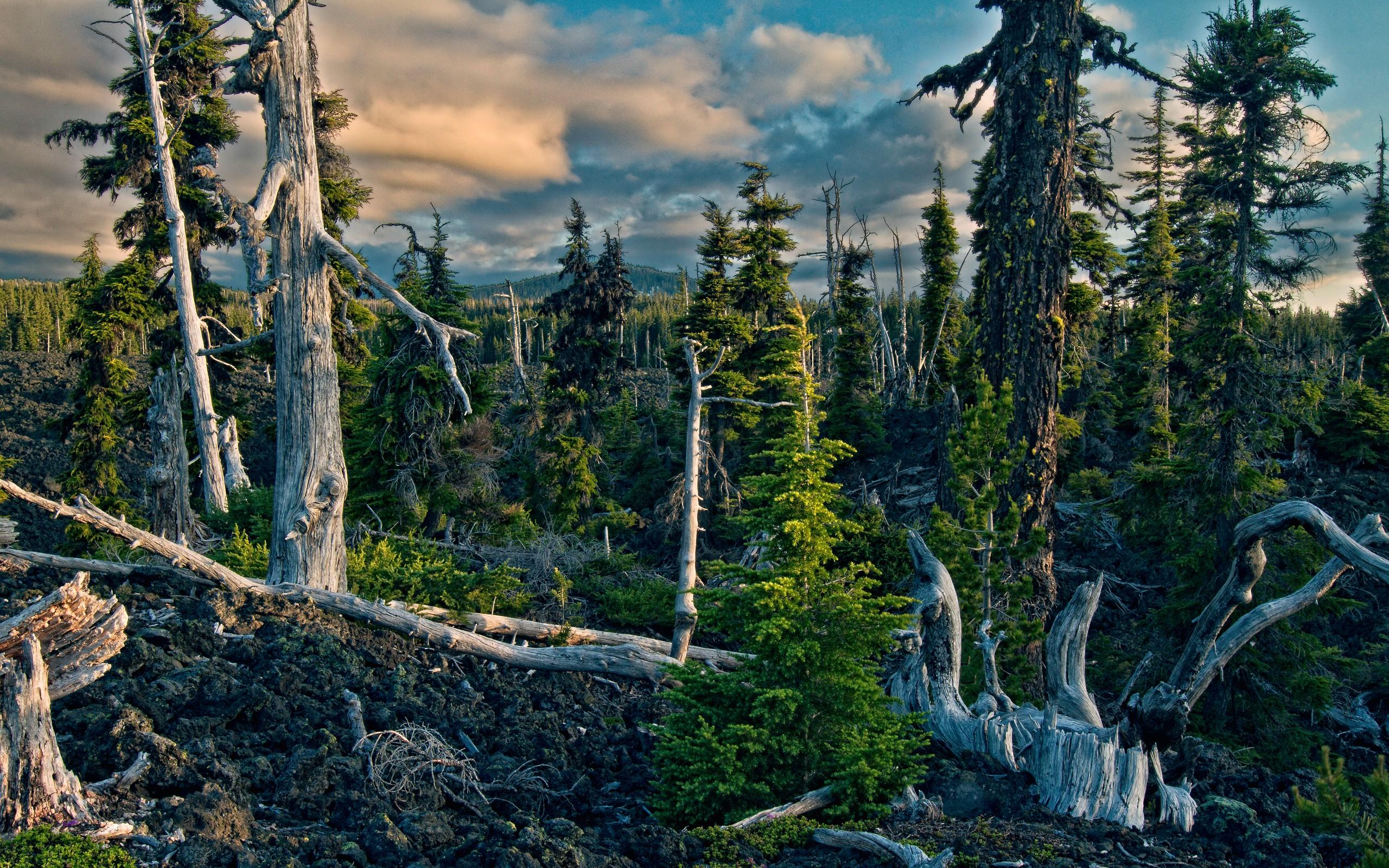 природа лес деревья ели гора облака небо  № 2757438 загрузить