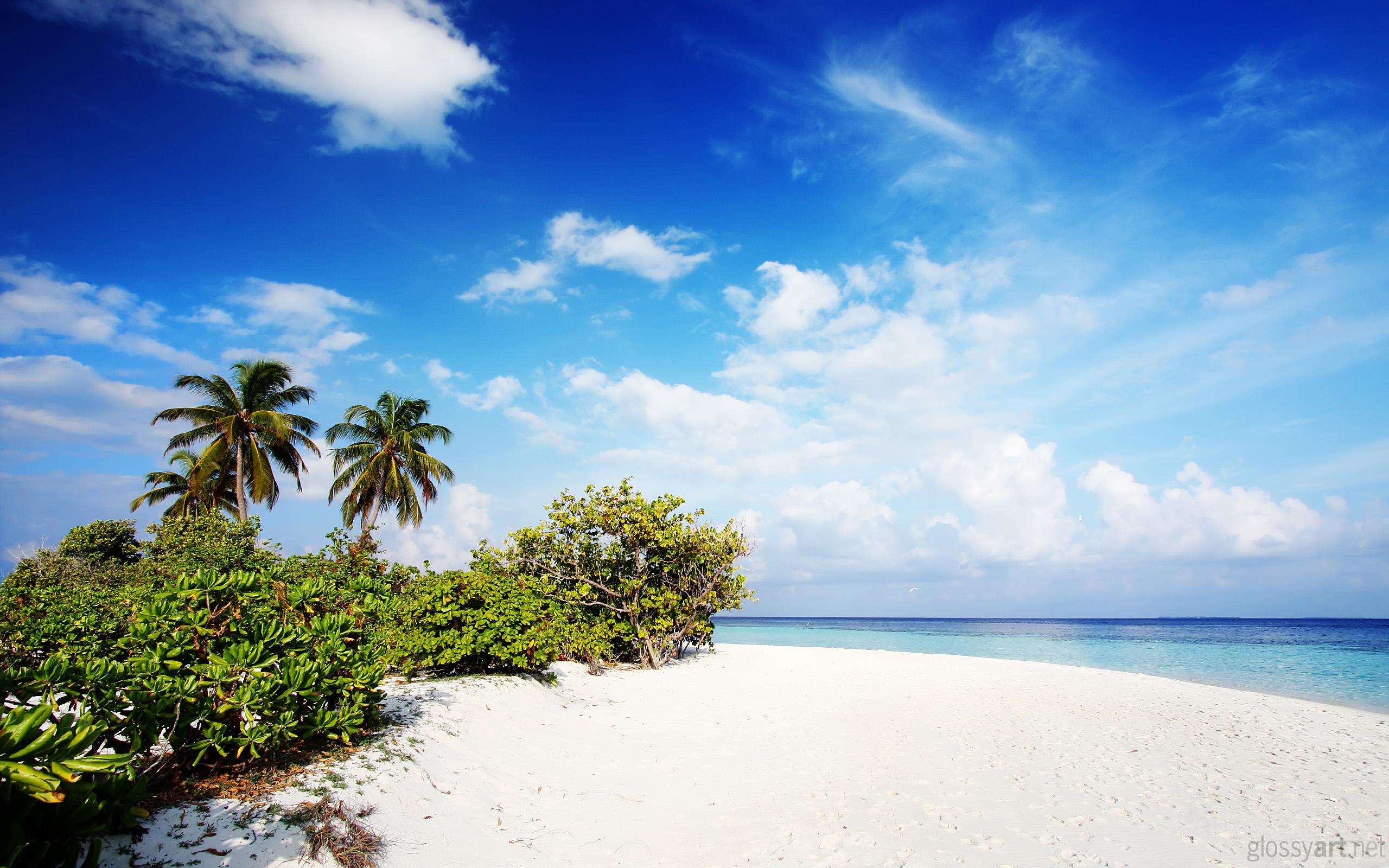 природа море облака деревья пляж бесплатно