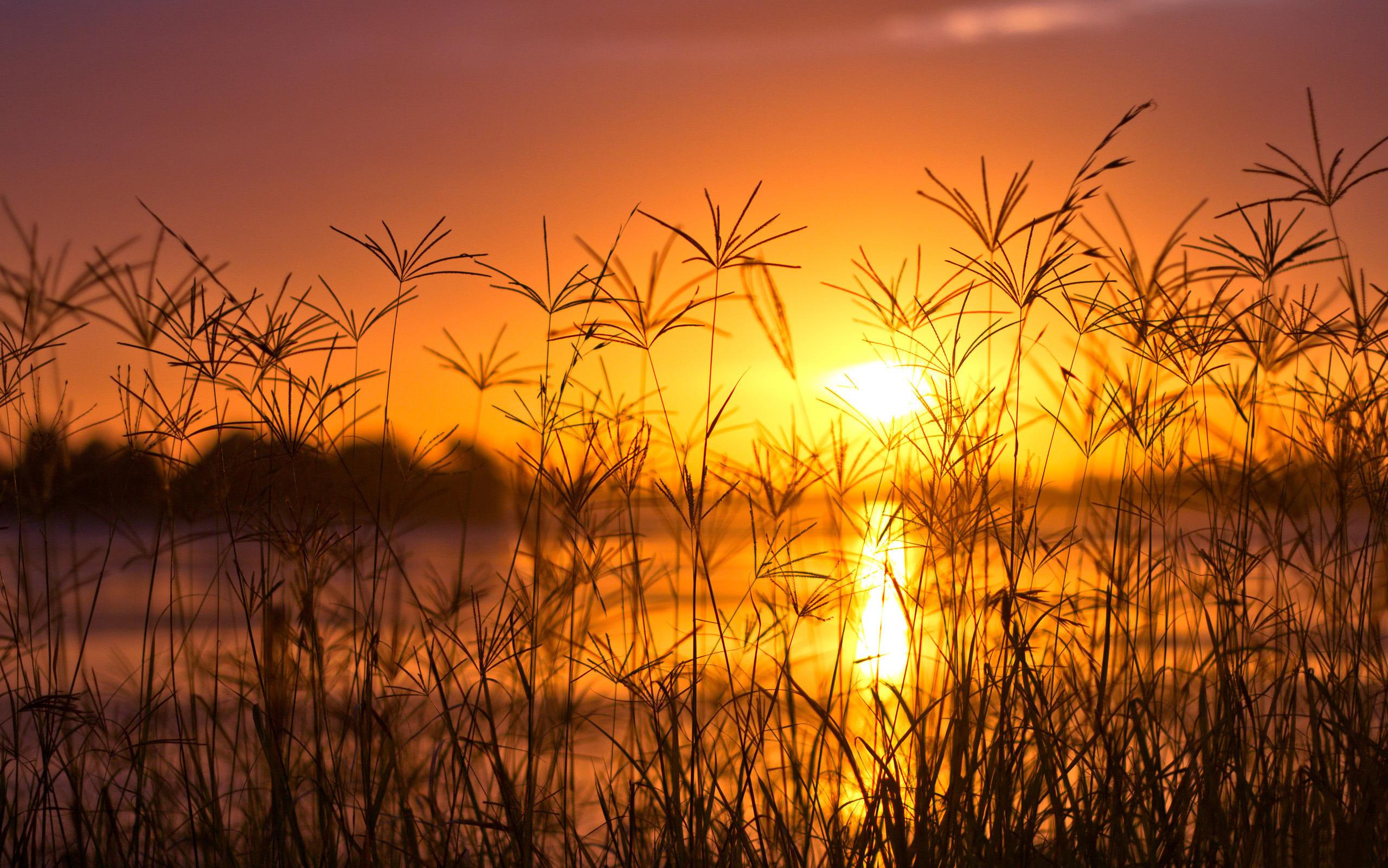 закат трава цветы озеро  № 1025335  скачать