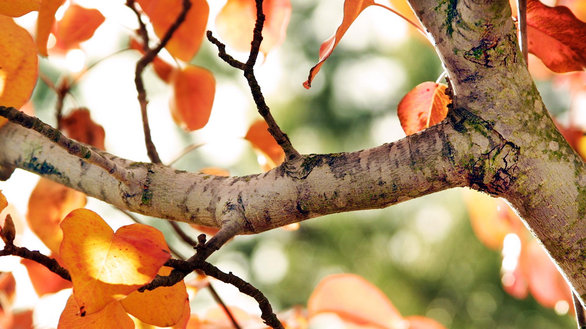 природа деревья ветки листья nature trees branches leaves  № 1275083  скачать