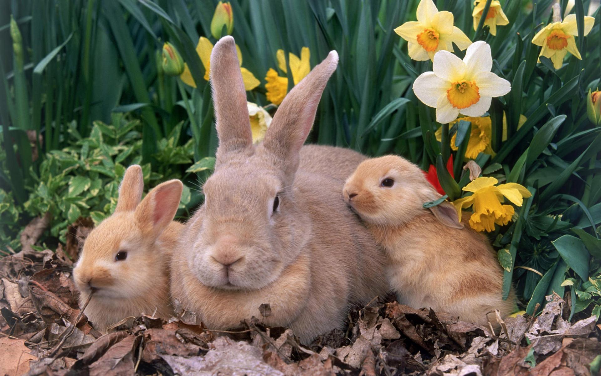Кролик макро  № 3207803  скачать