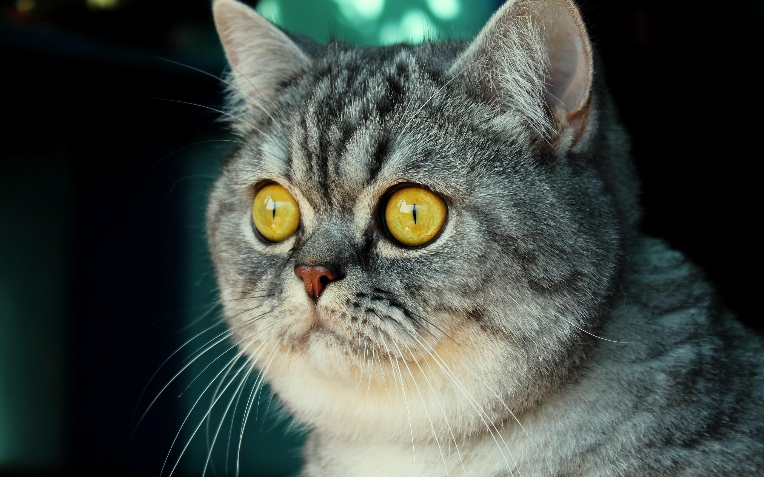 Смешные котики серый