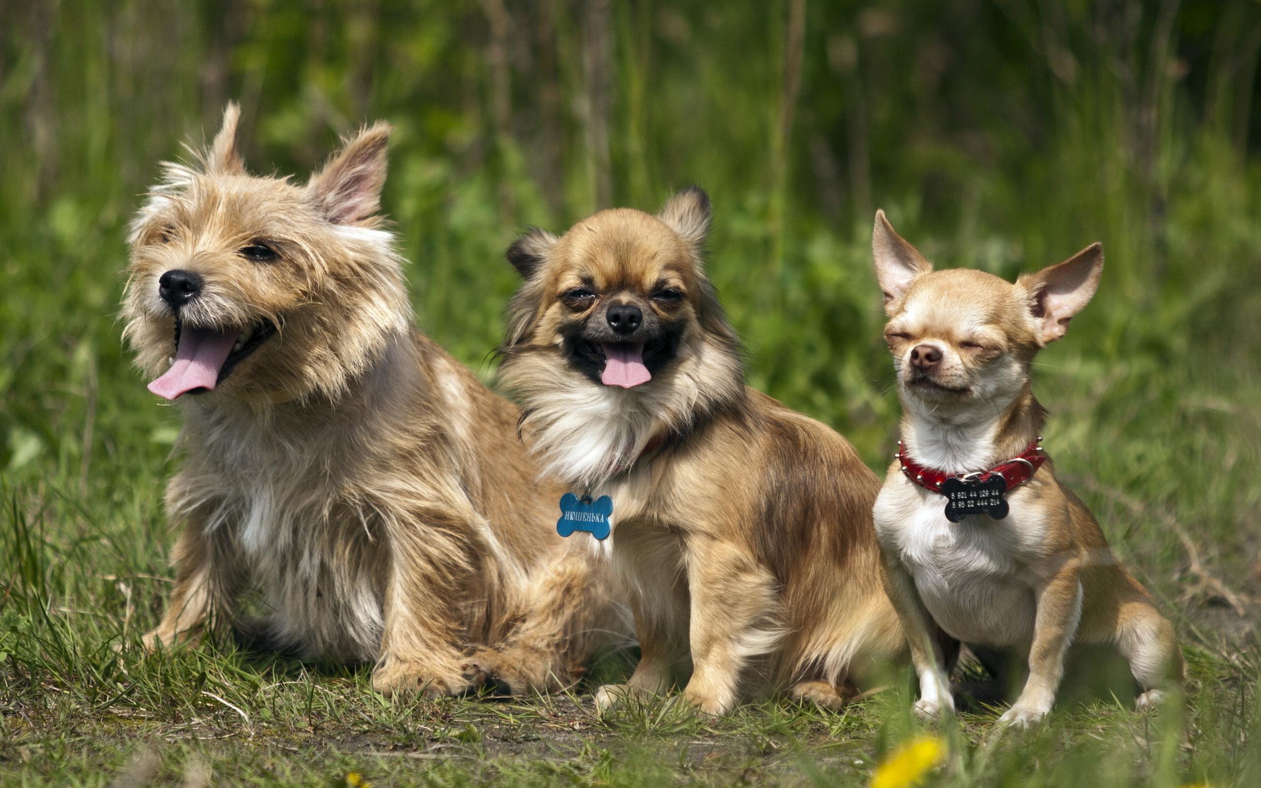 Веселые картинки собак разных пород, февраля сынуля