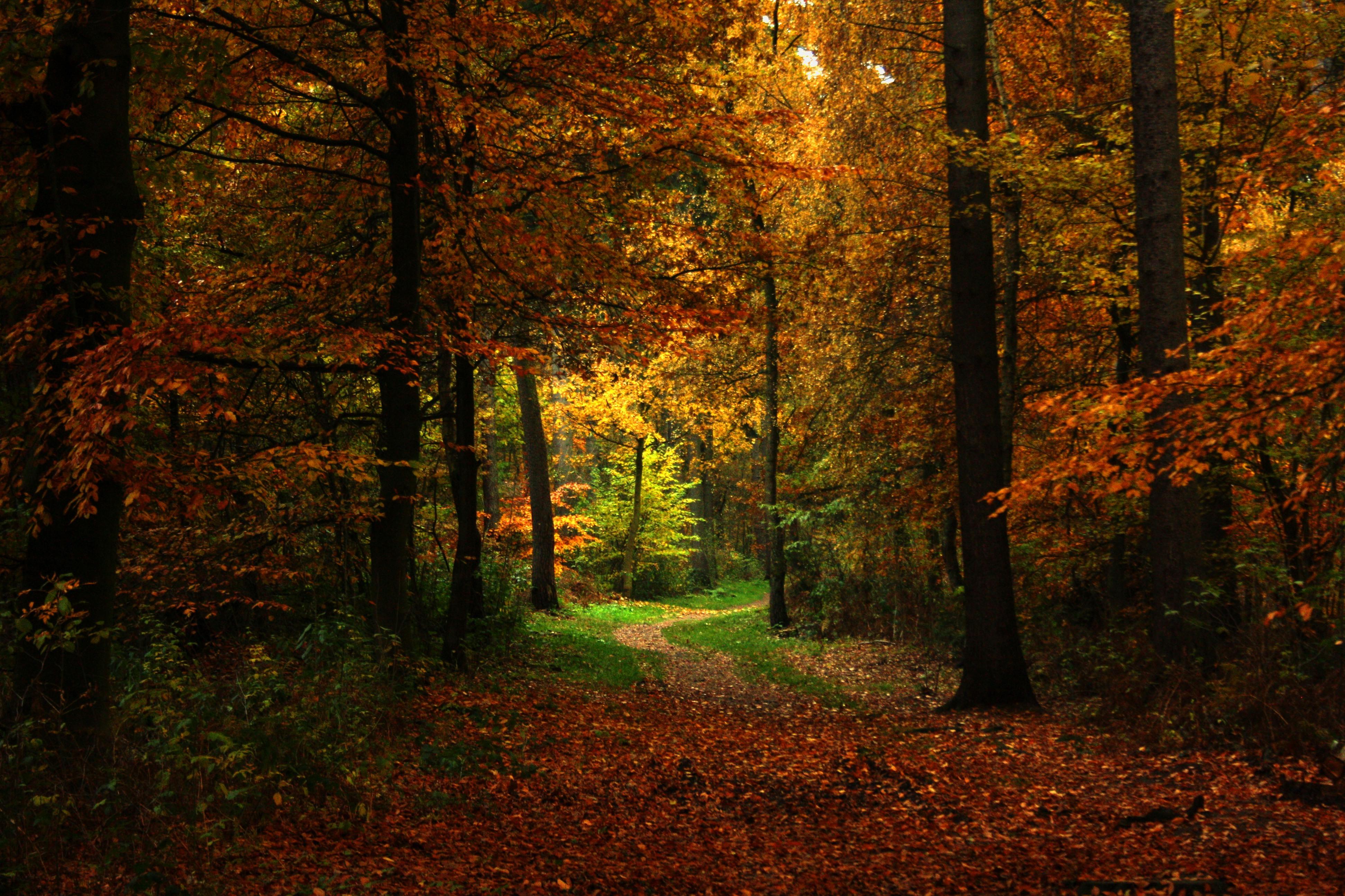 природа деревья лес тропа  № 1206304 без смс