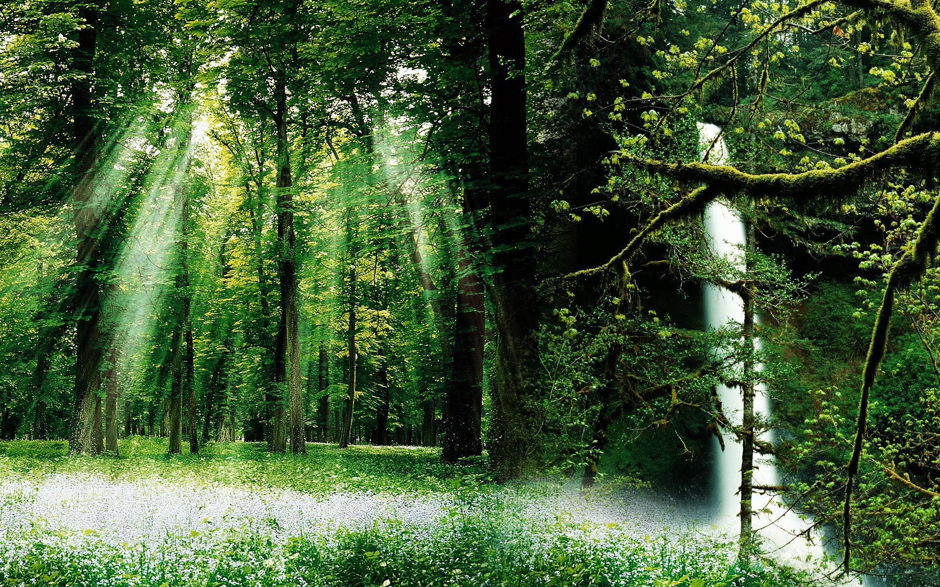 Открытки, открытки лес природа
