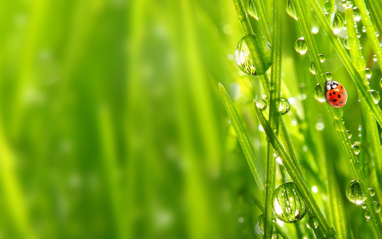 Зеленая, летняя трава  № 1074224 без смс