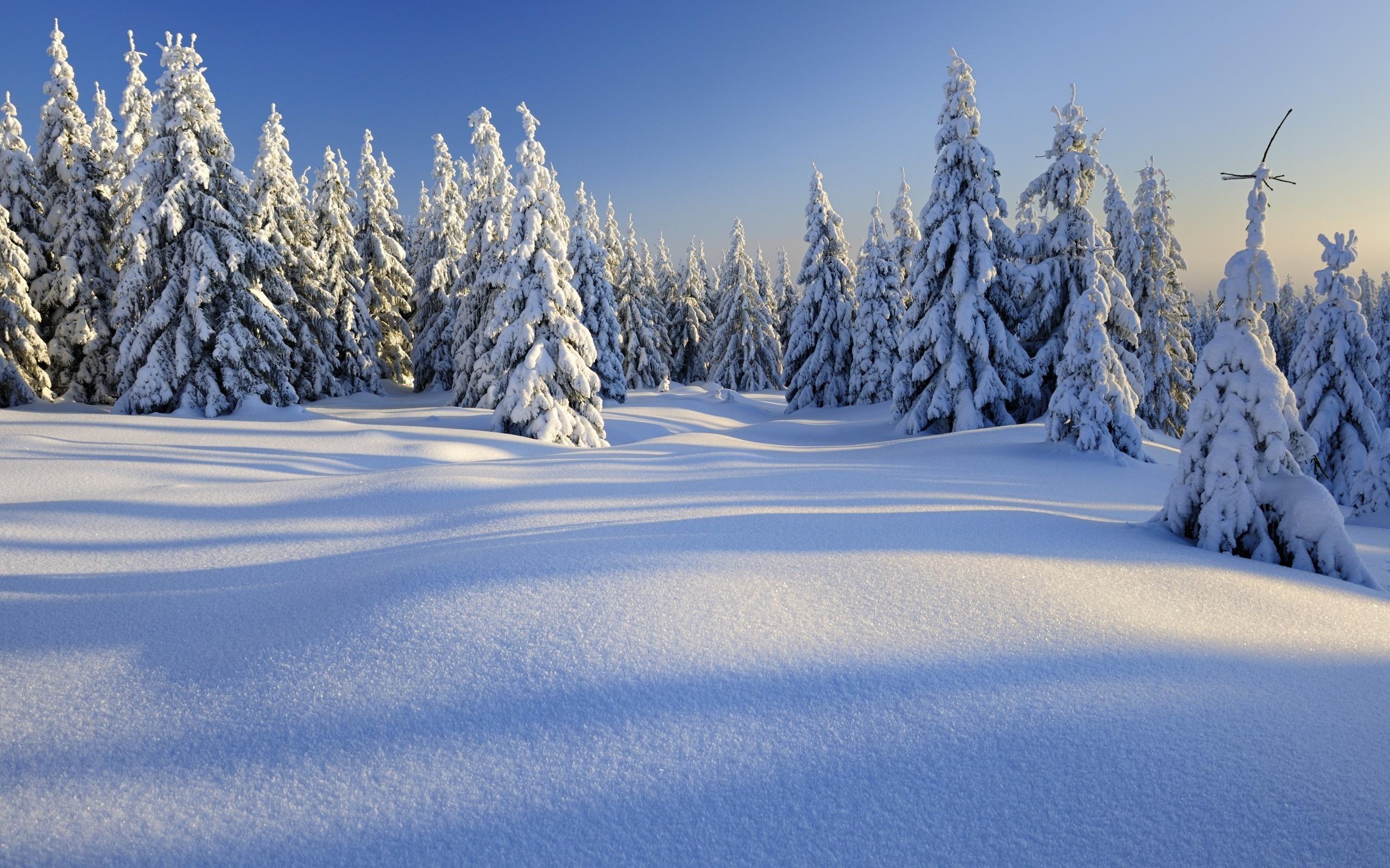природа горы зима деревья снег без смс