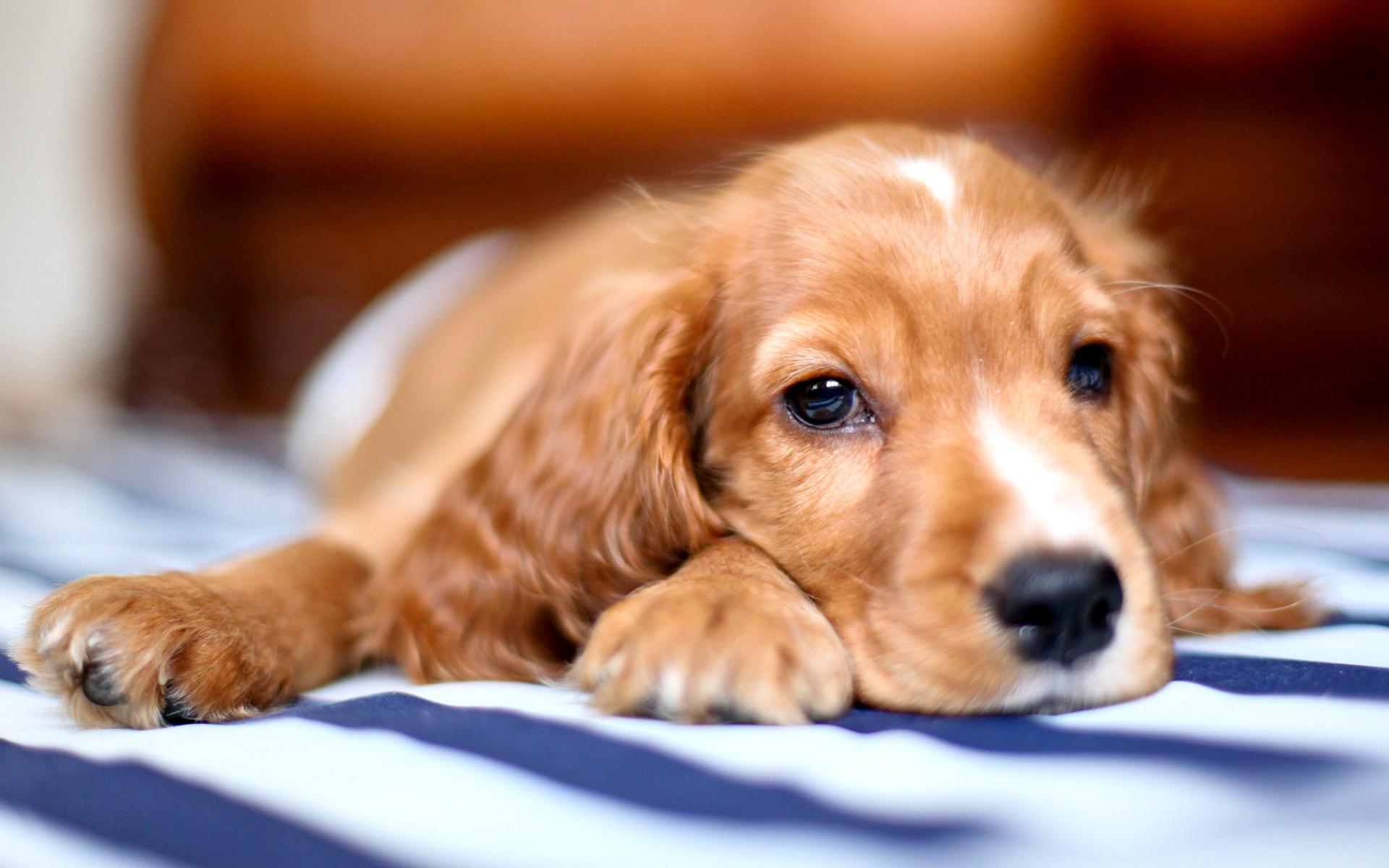 миленькая собачка без смс