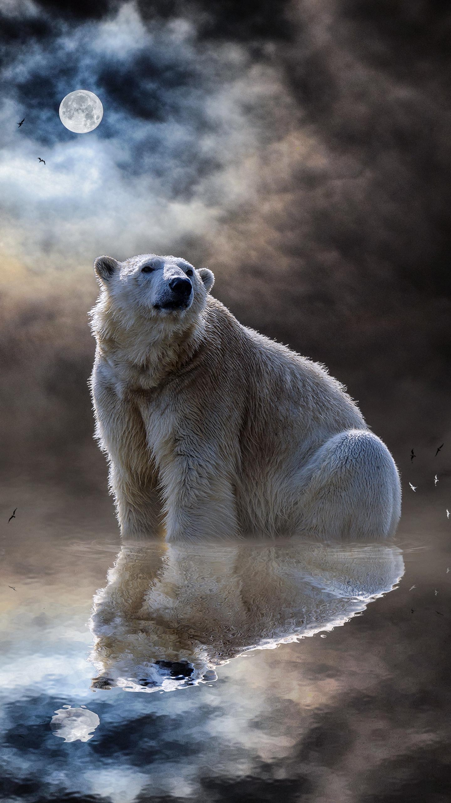 картинки для телефона белый медведь можно отнести