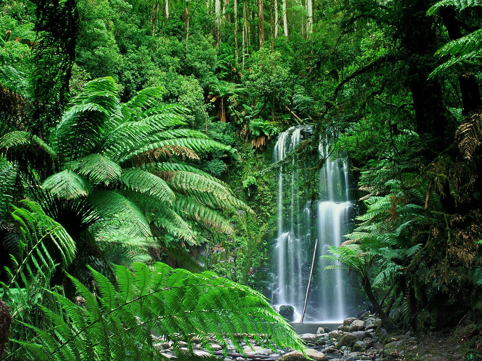an analysis of the importance of tropical rain forests in the worlds ecology