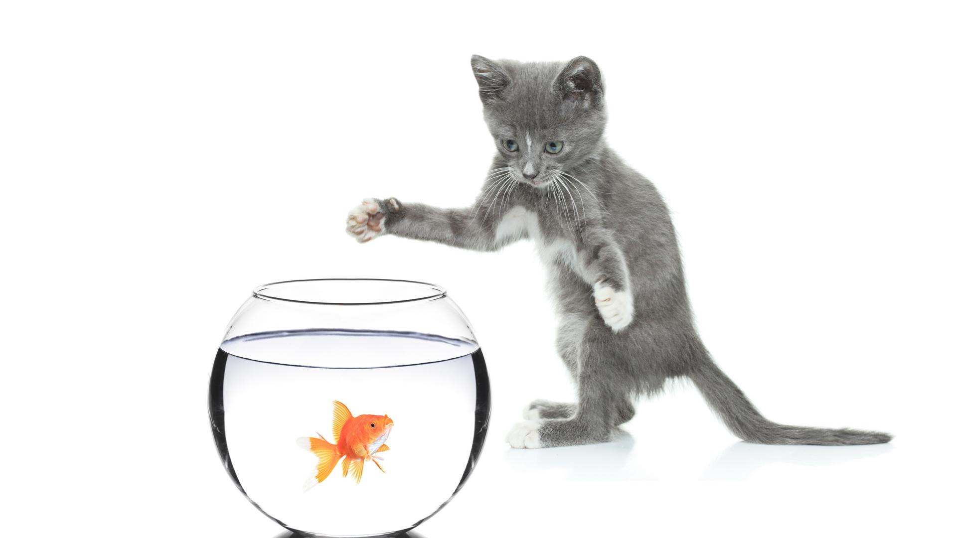 серый кот с рыбкой  № 692221  скачать