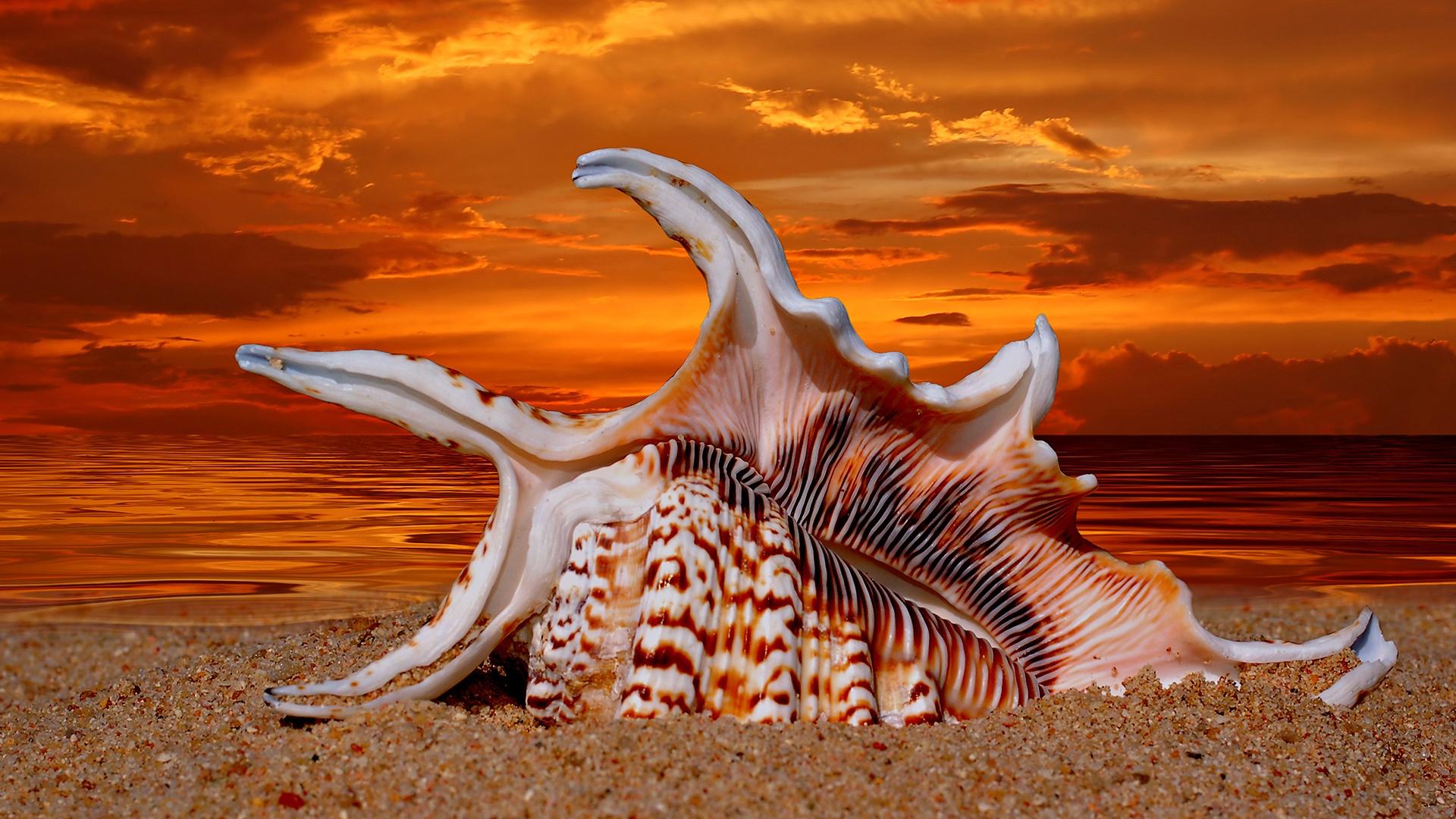 Картинки, картинки ракушек на море