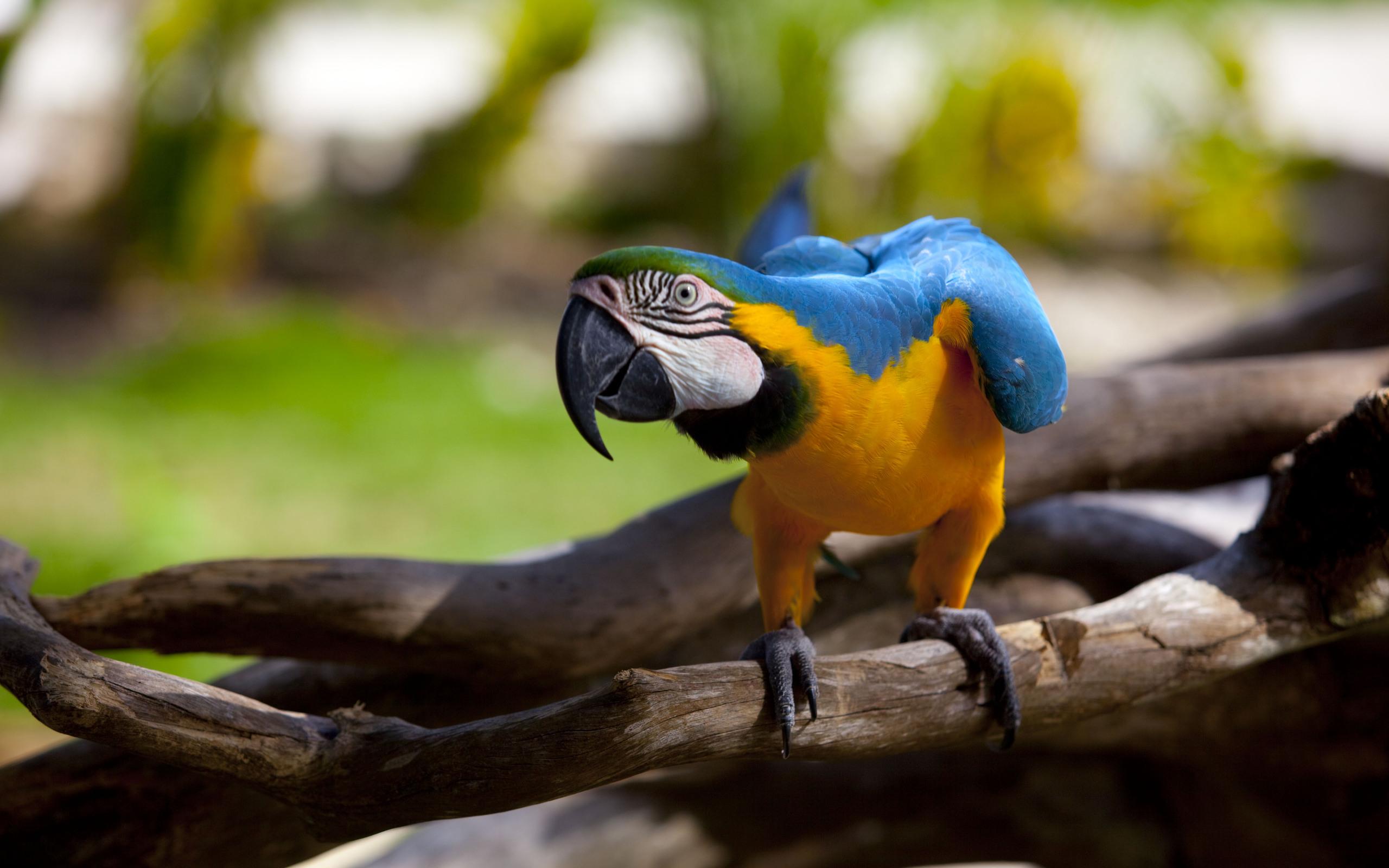 природа животные птицы попугаи  № 103502  скачать