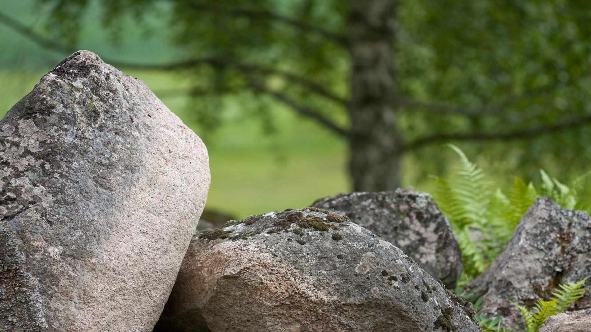 Зеленый мох на камне загрузить