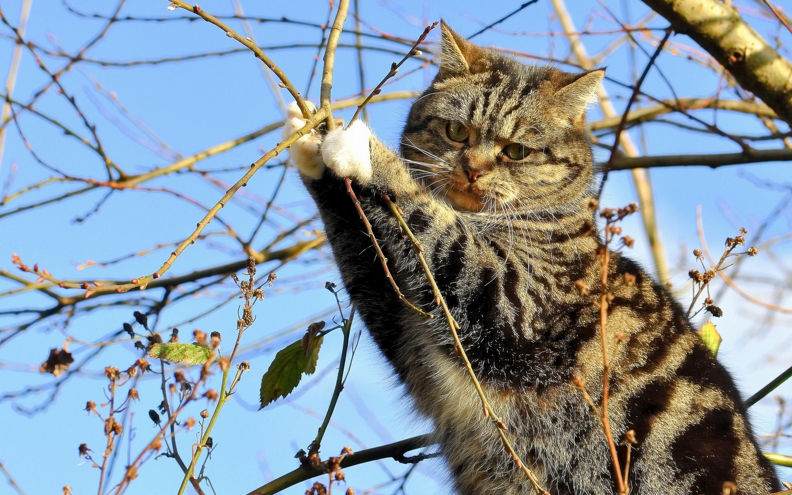 Кот на ветке  № 1118359 бесплатно