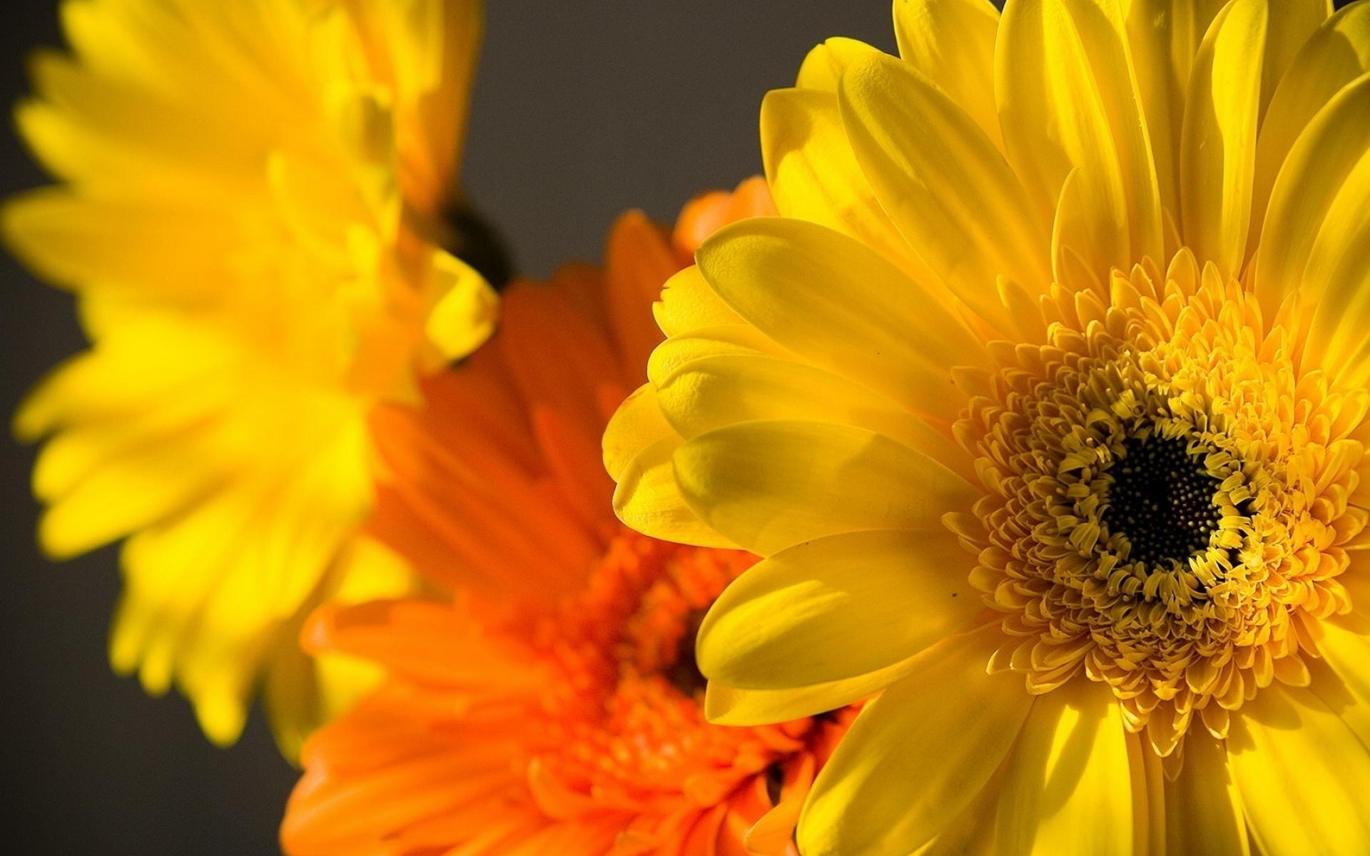 Желтые картинки красивые, маме дочке