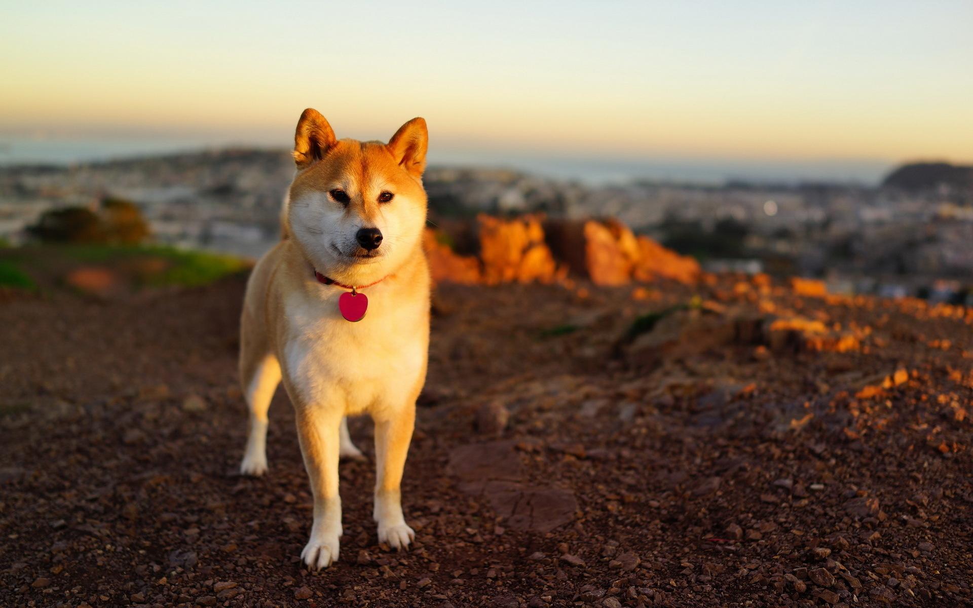 Собака на фоне заката  № 2038636 загрузить
