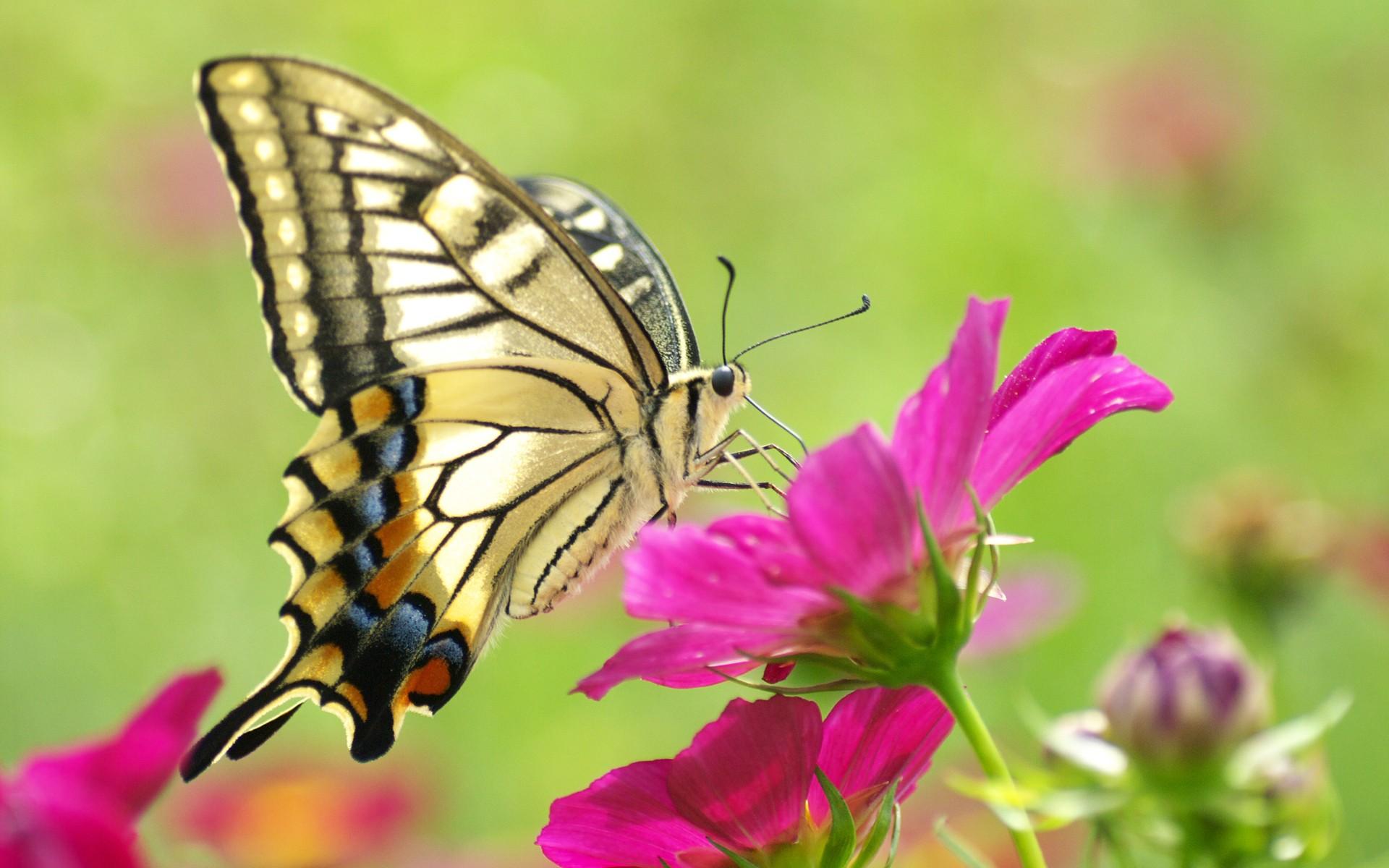 Разные бабочки  № 2033740 без смс