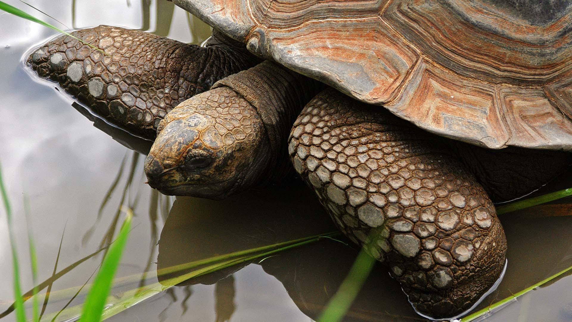 Зеленая черепаха на траве в хорошем качестве