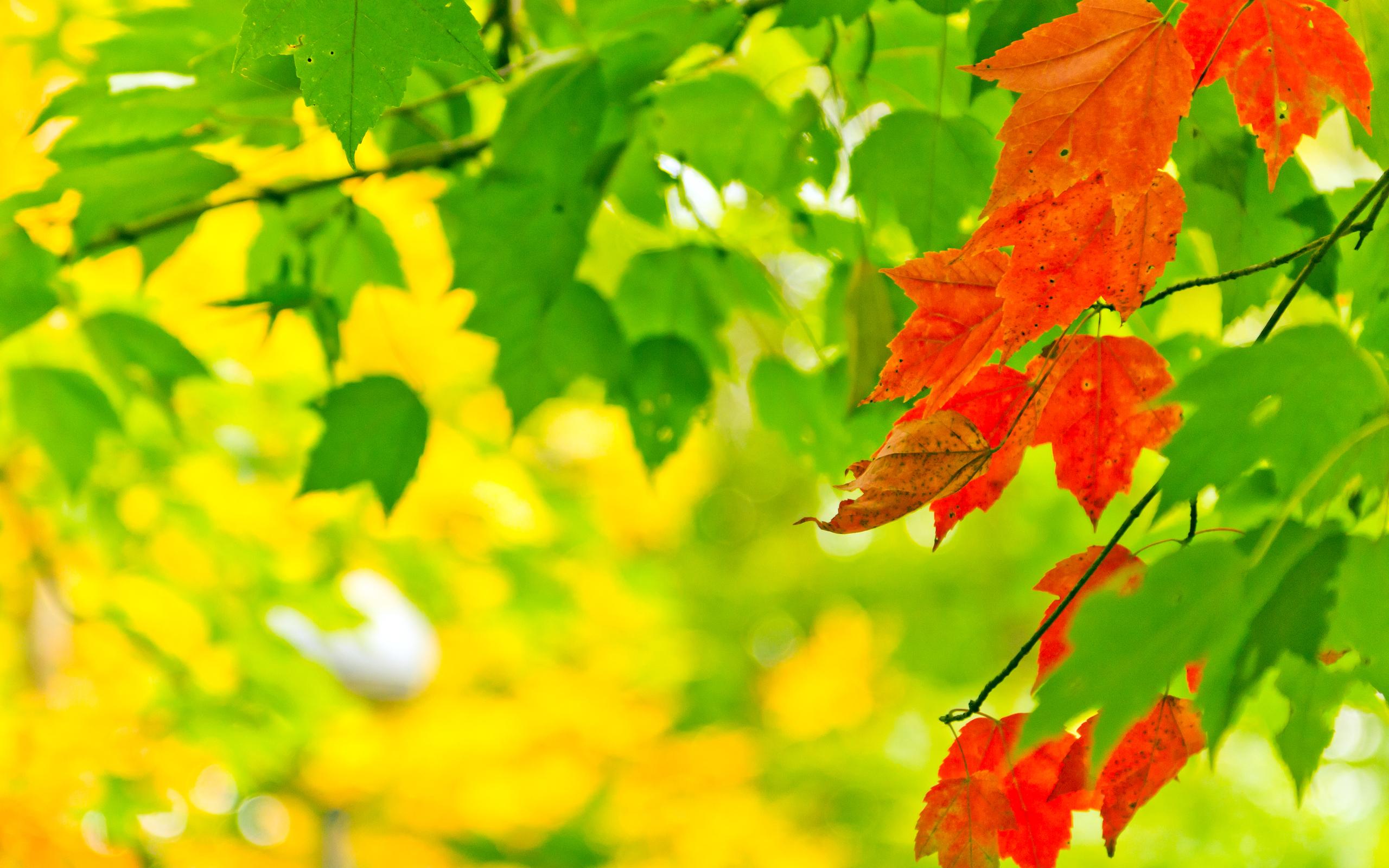 природа лист осень  № 543270  скачать