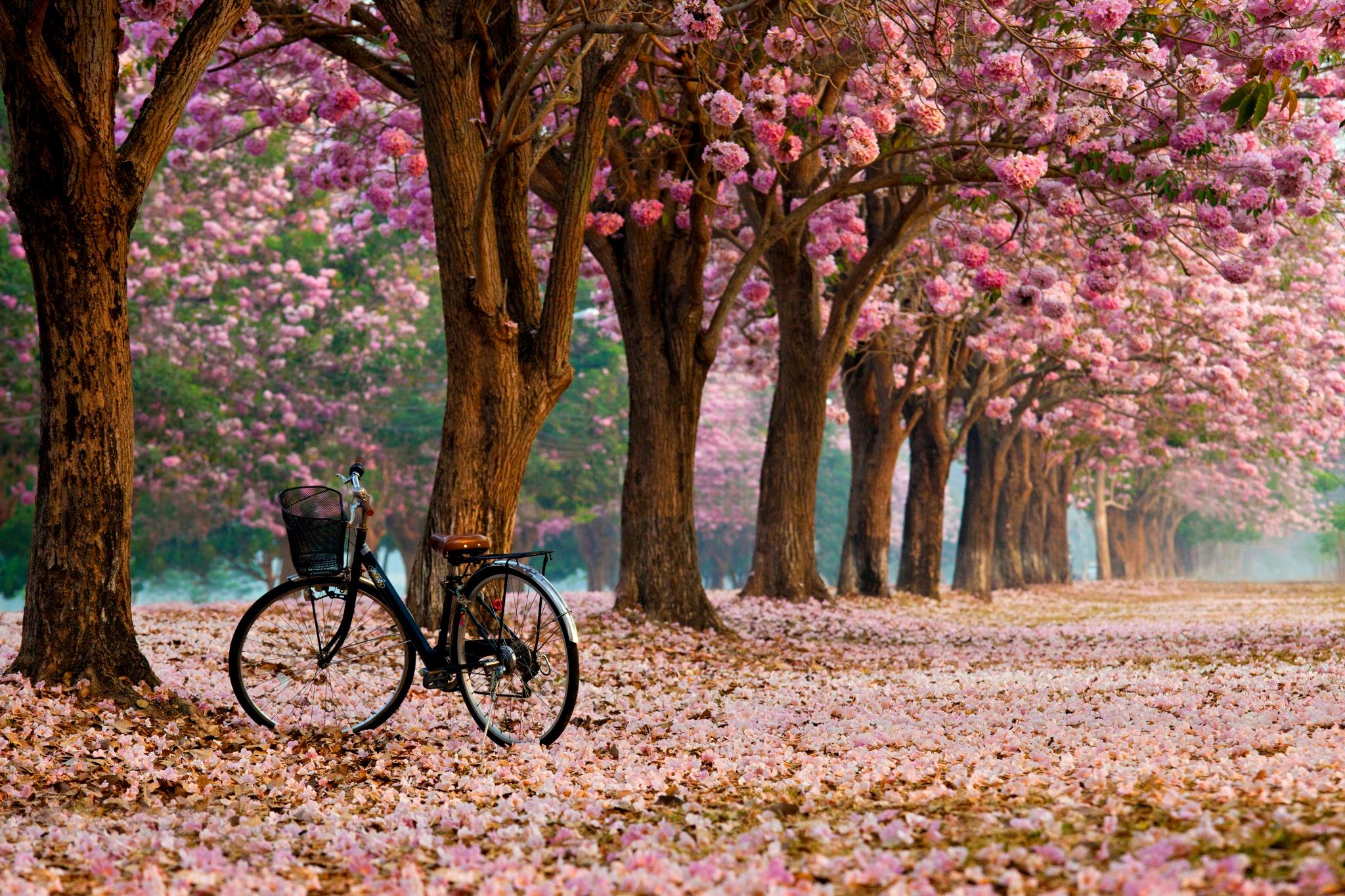 природа цветы деревья nature flowers trees загрузить