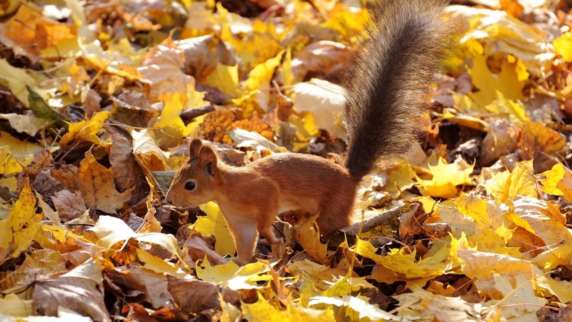Открытки животные осенью, картинка анимация картинки