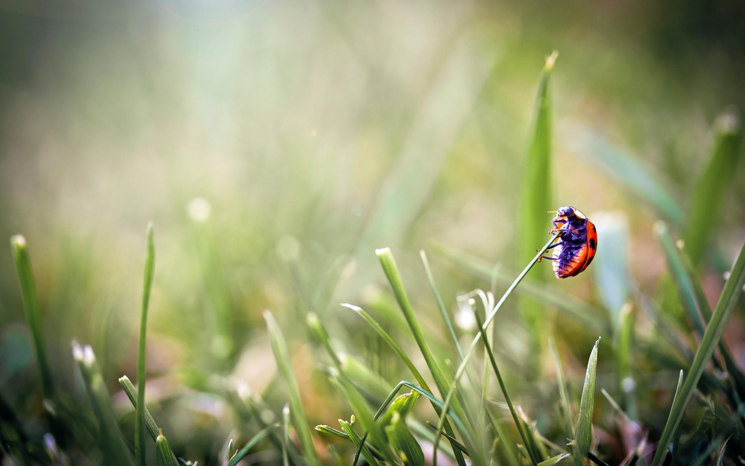 природа насекомое макро божья коровка цветы роса без смс