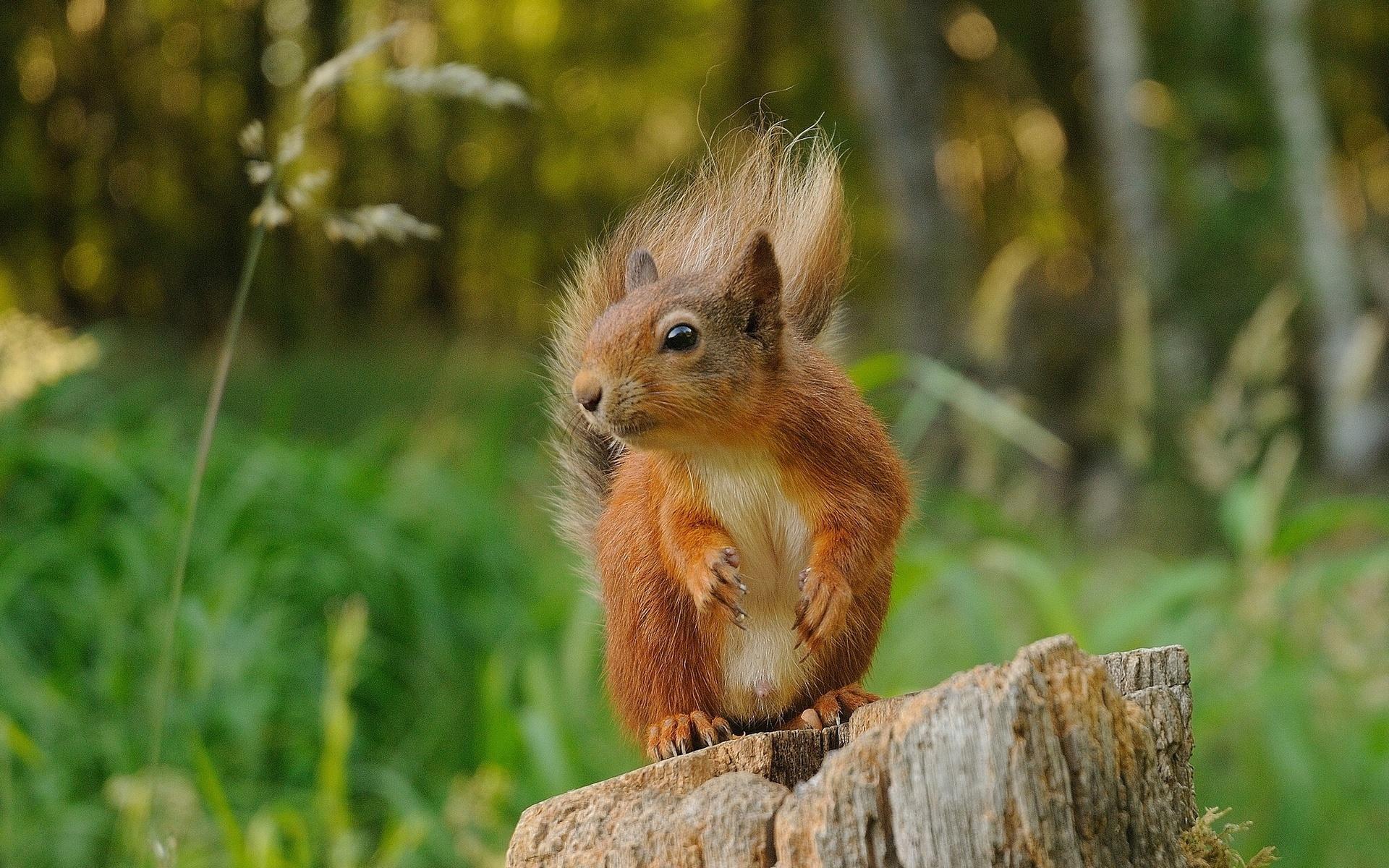 Спасибо спасибо, картинки лесных животных смешные