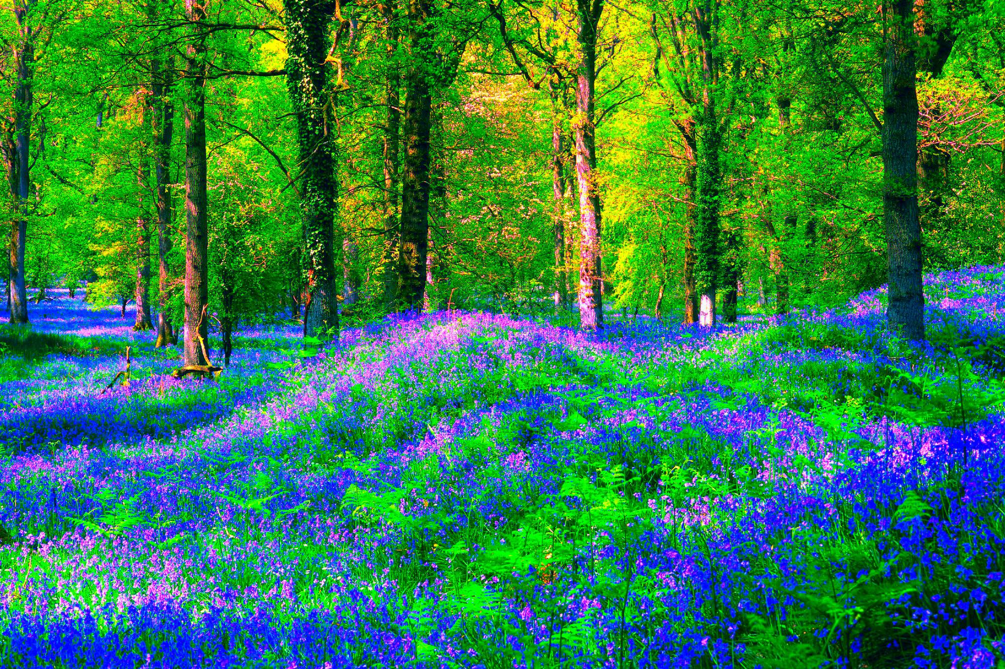 красивый весенний лес фотографии на рабочий стол