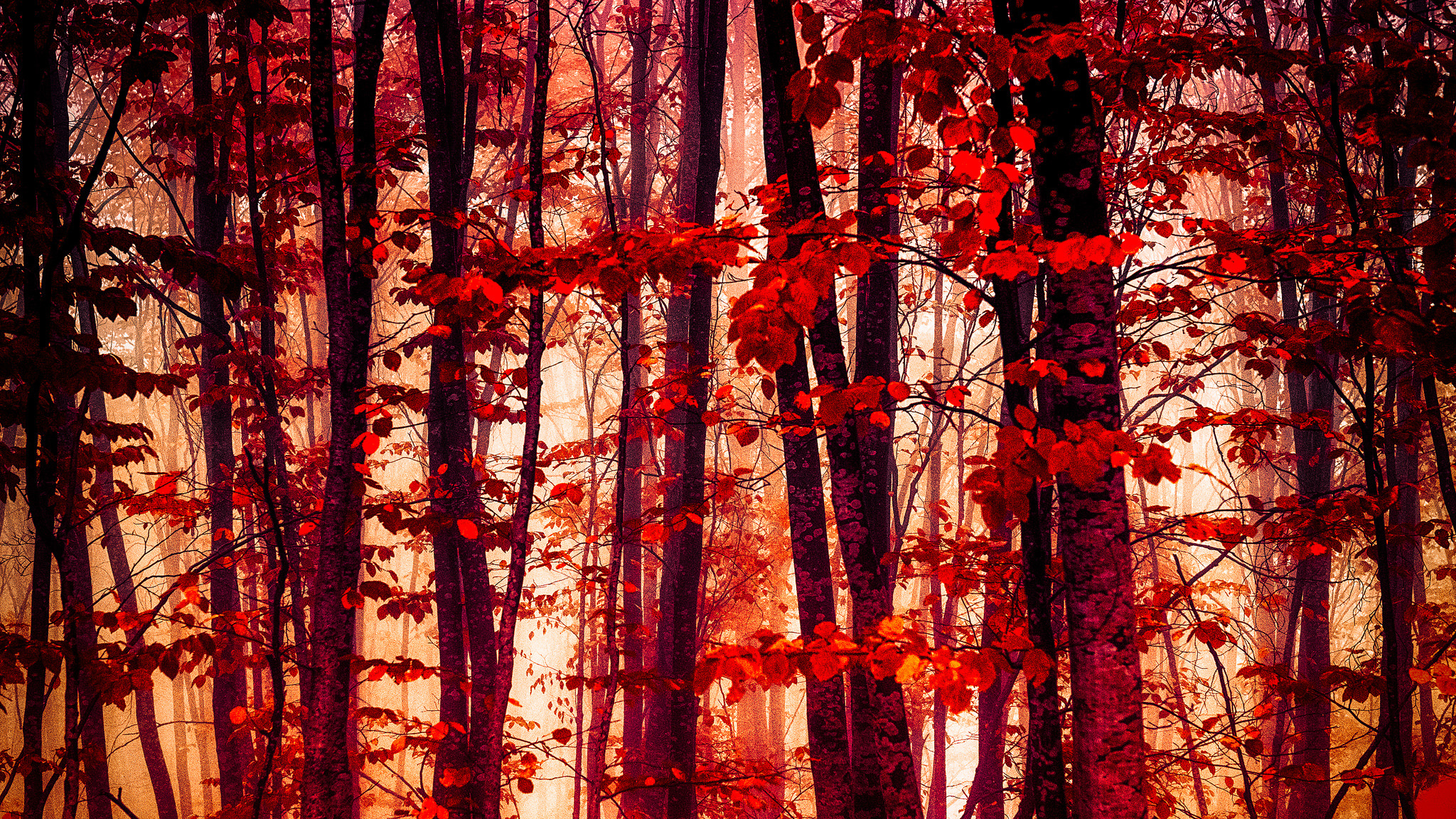 красный осенний лес  № 249297 без смс