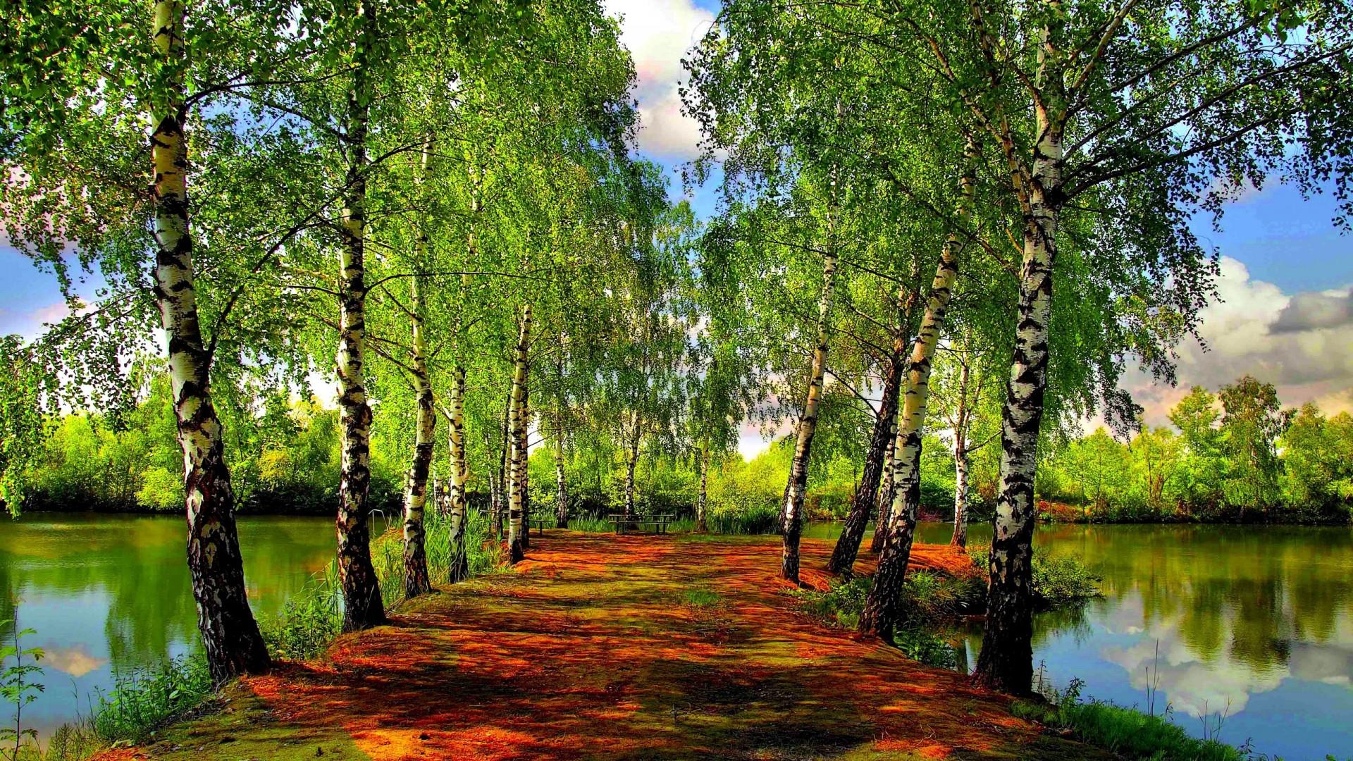 речка лето зелень березы онлайн