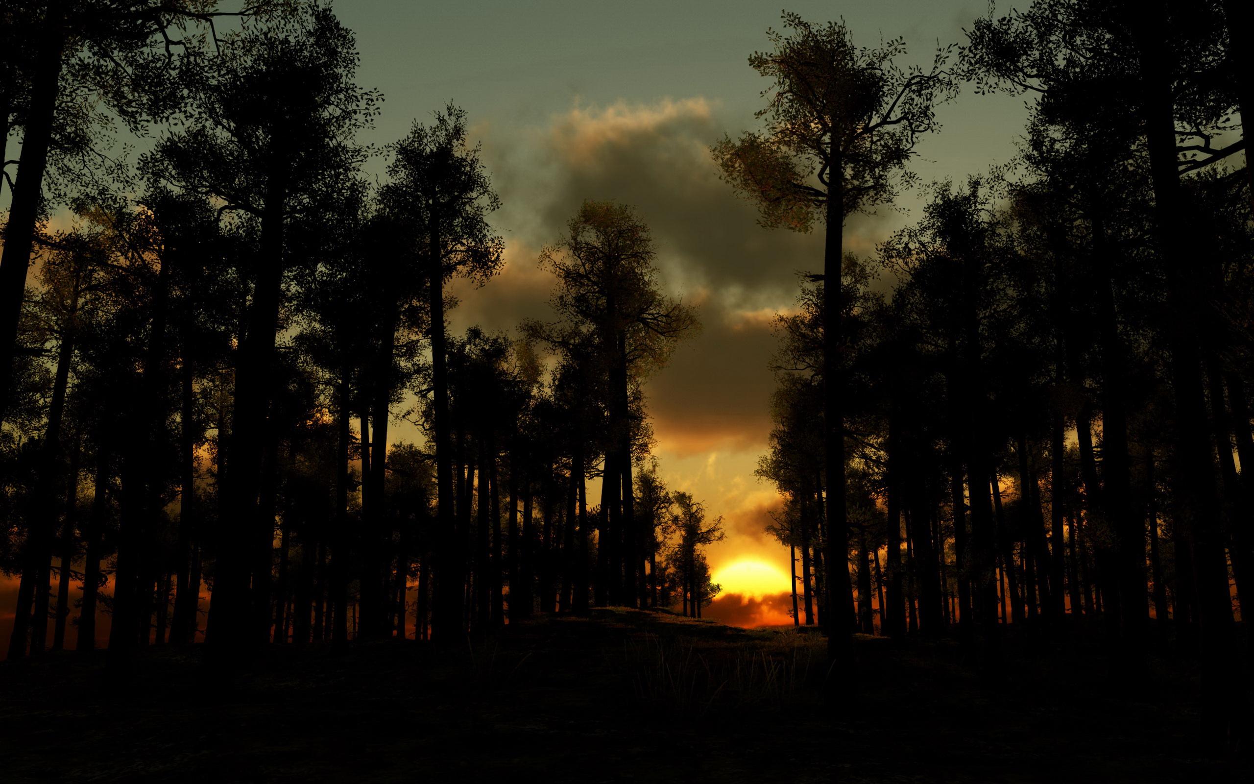 Закат за лесом над водой без смс