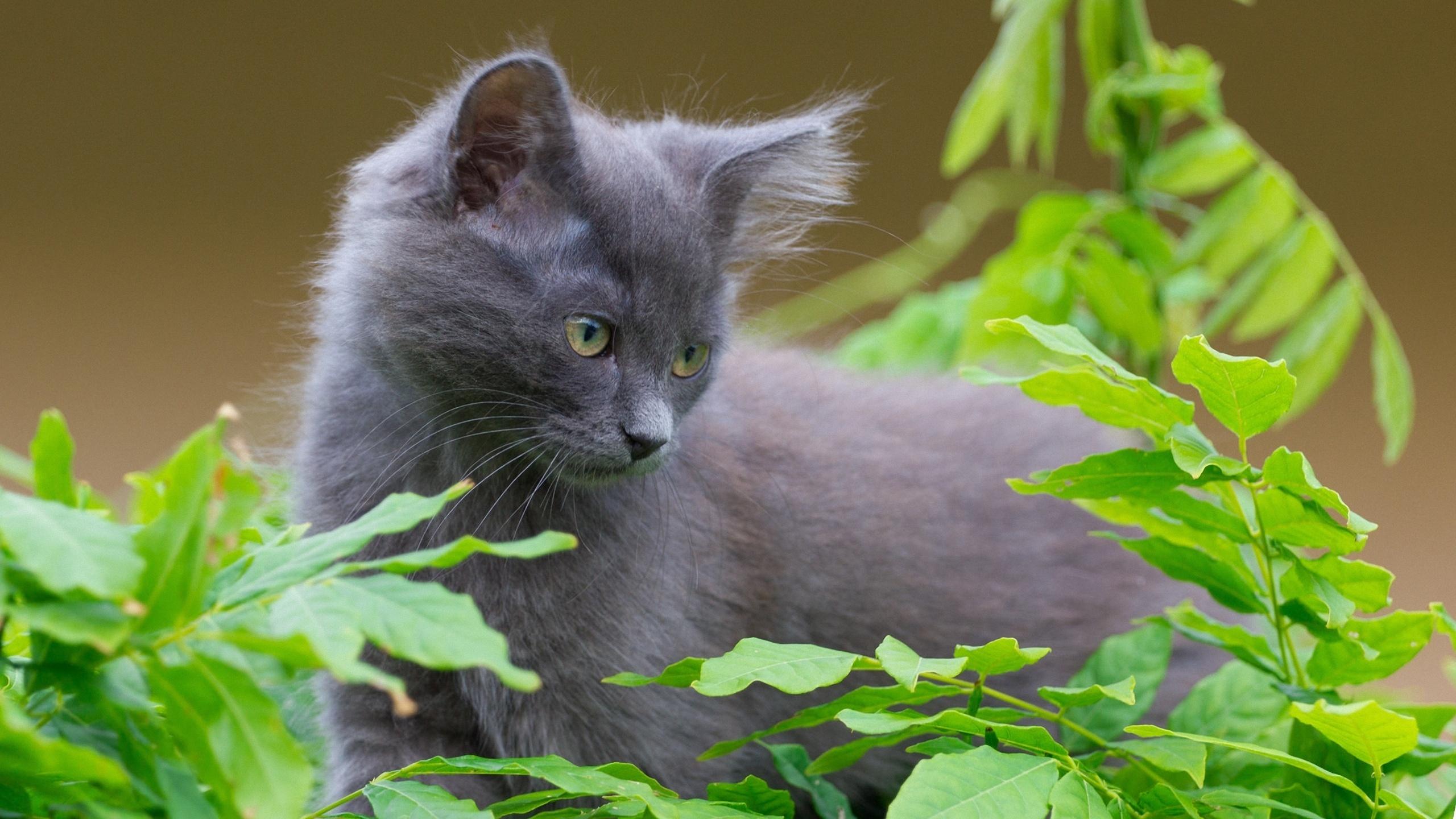 Дымчатый кот в траве  № 252549 без смс