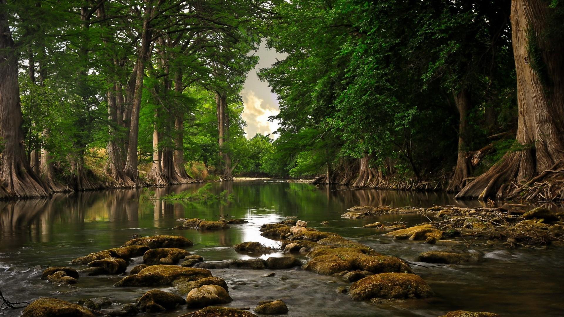 природа вода река трава деревья мох  № 3800879 бесплатно