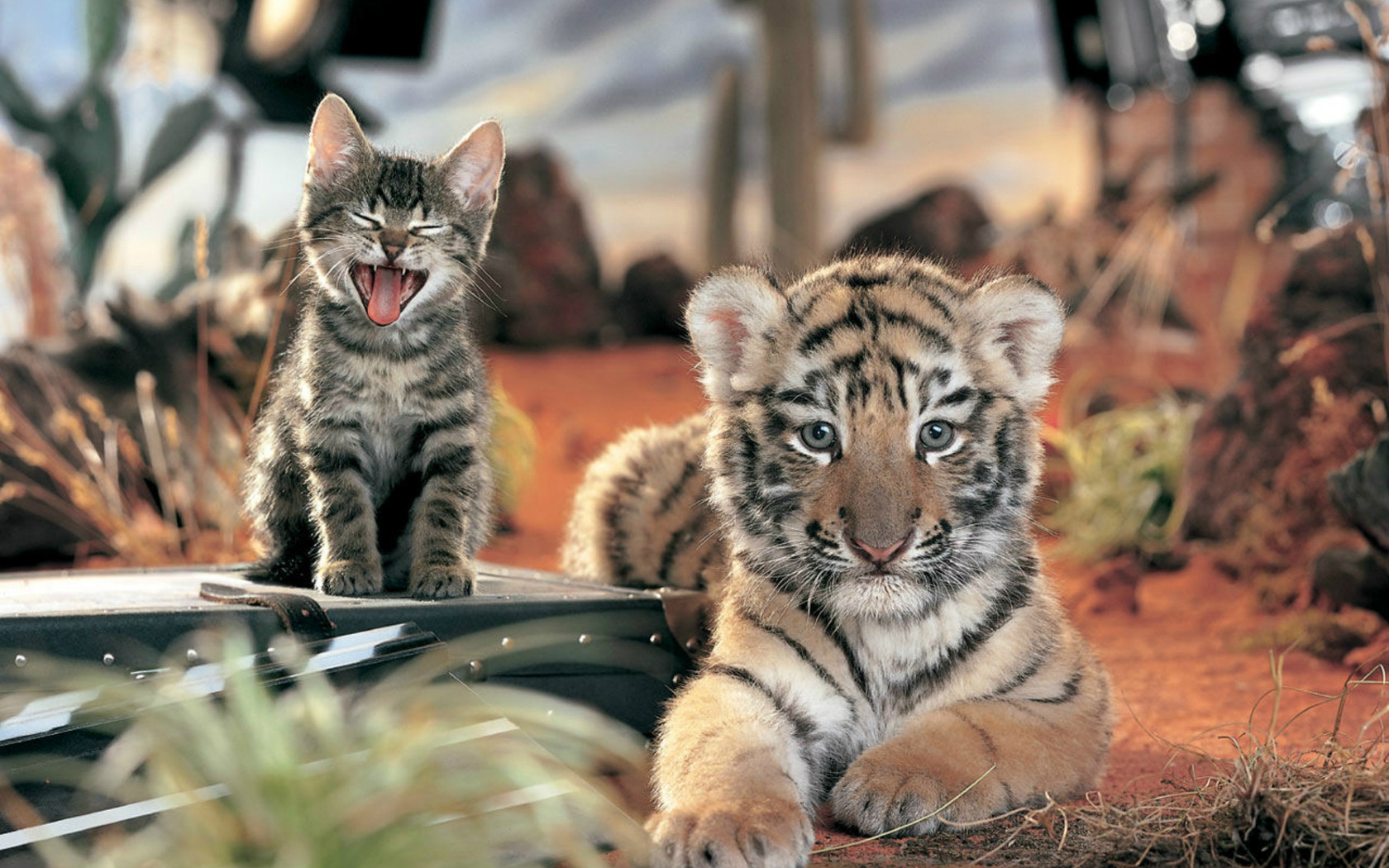 Картинки тигрят с надписью