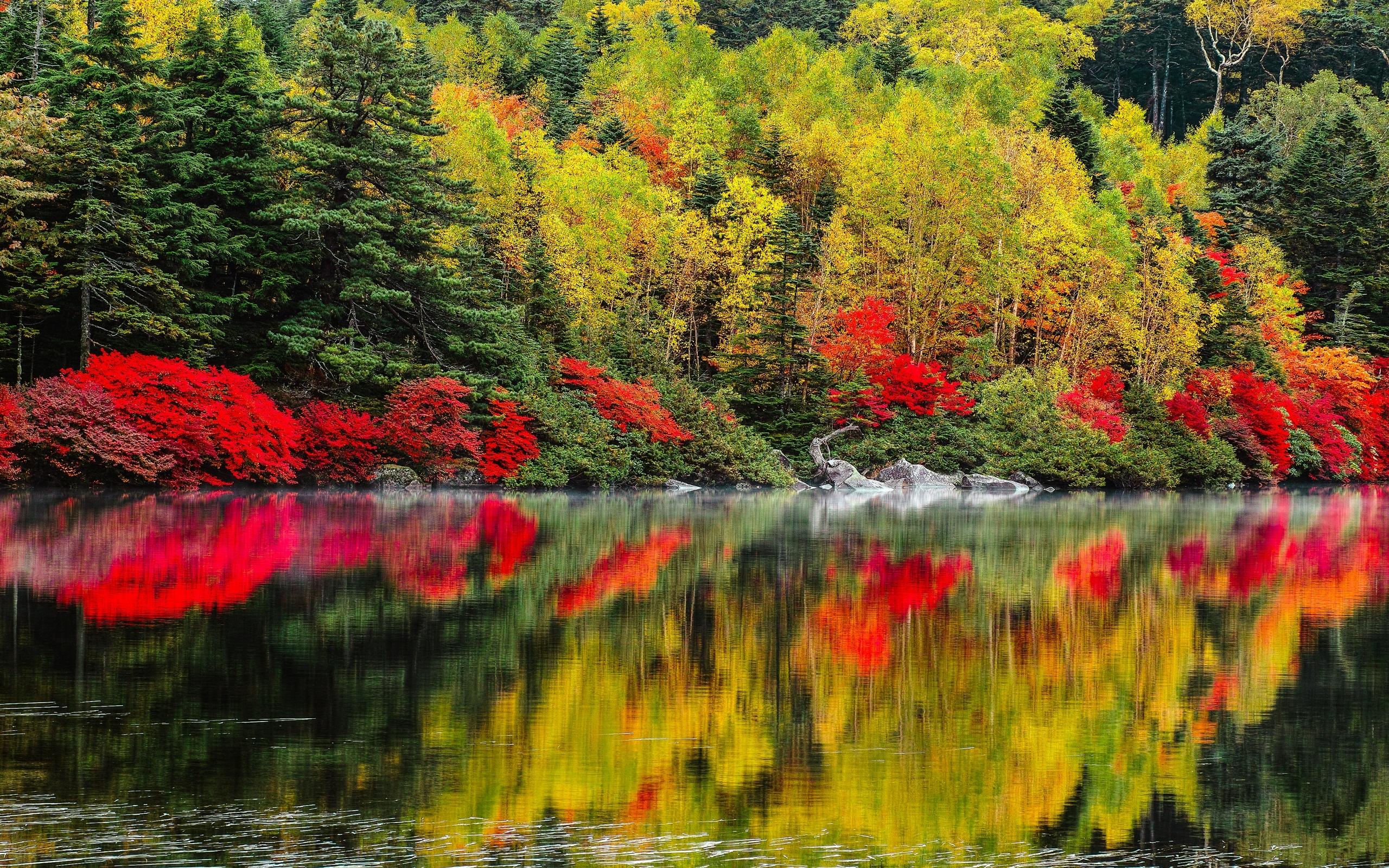 осенний лес у озера  № 254877 загрузить