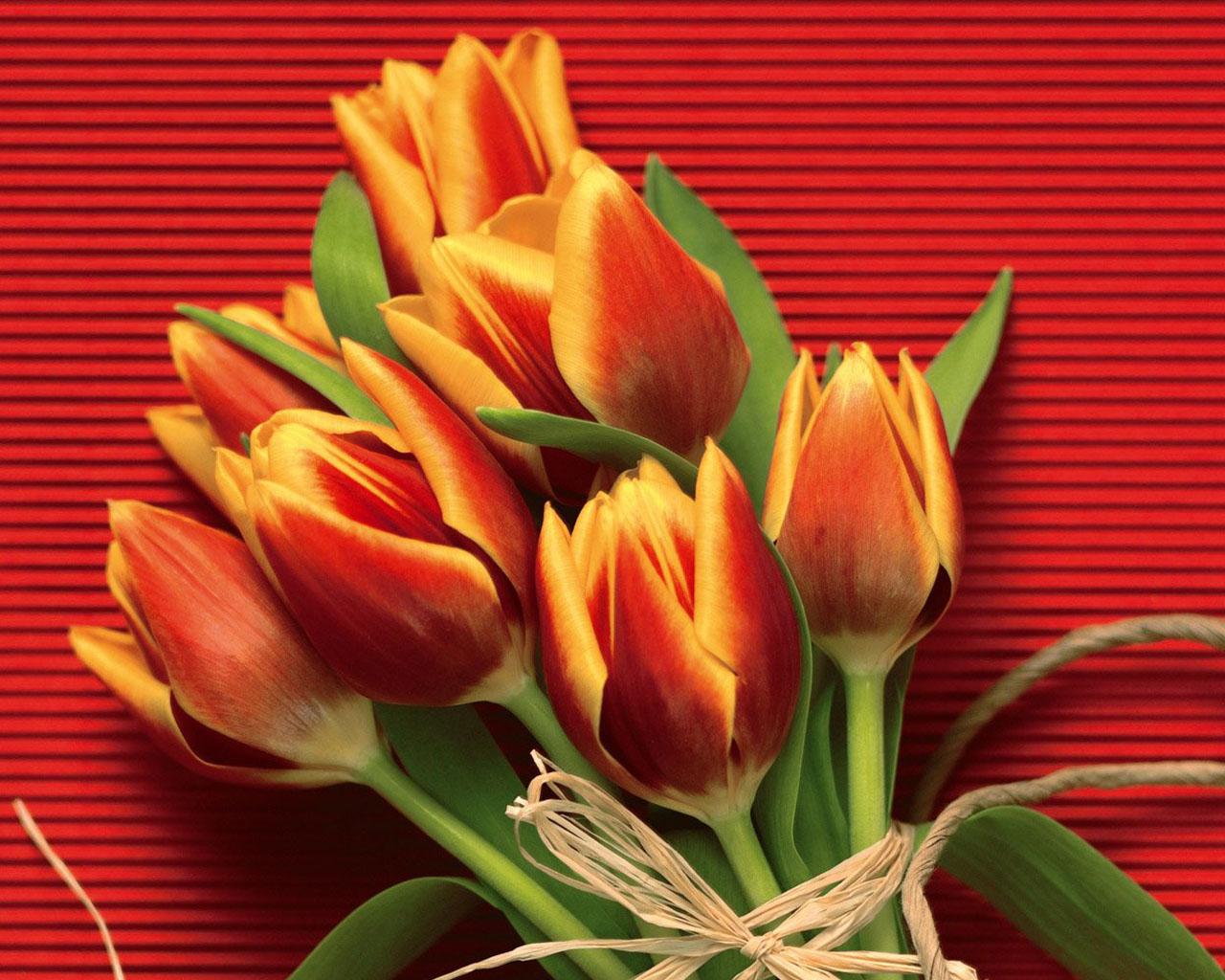 Картинки с днем тюльпанов