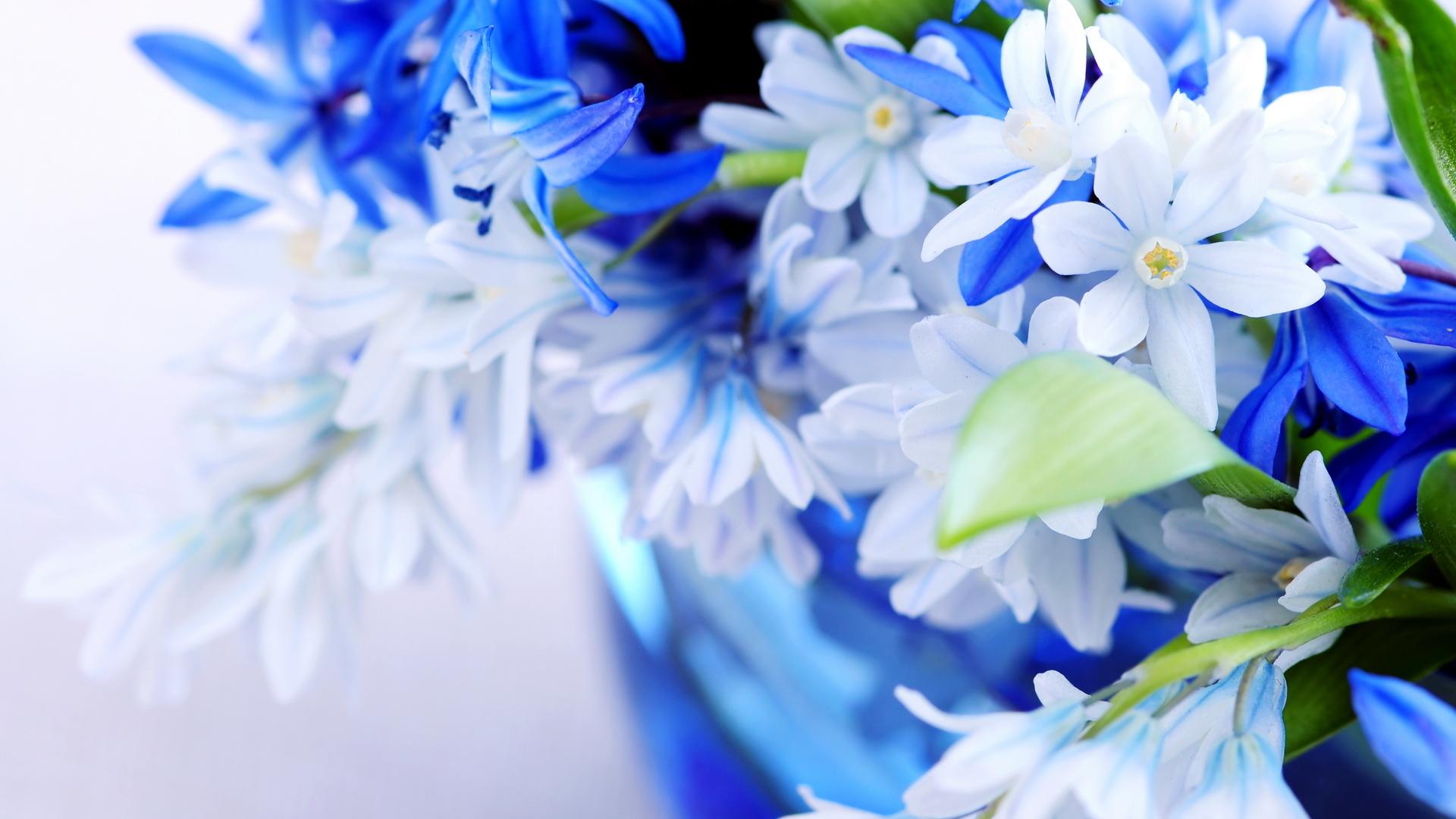 синий цветок загрузить