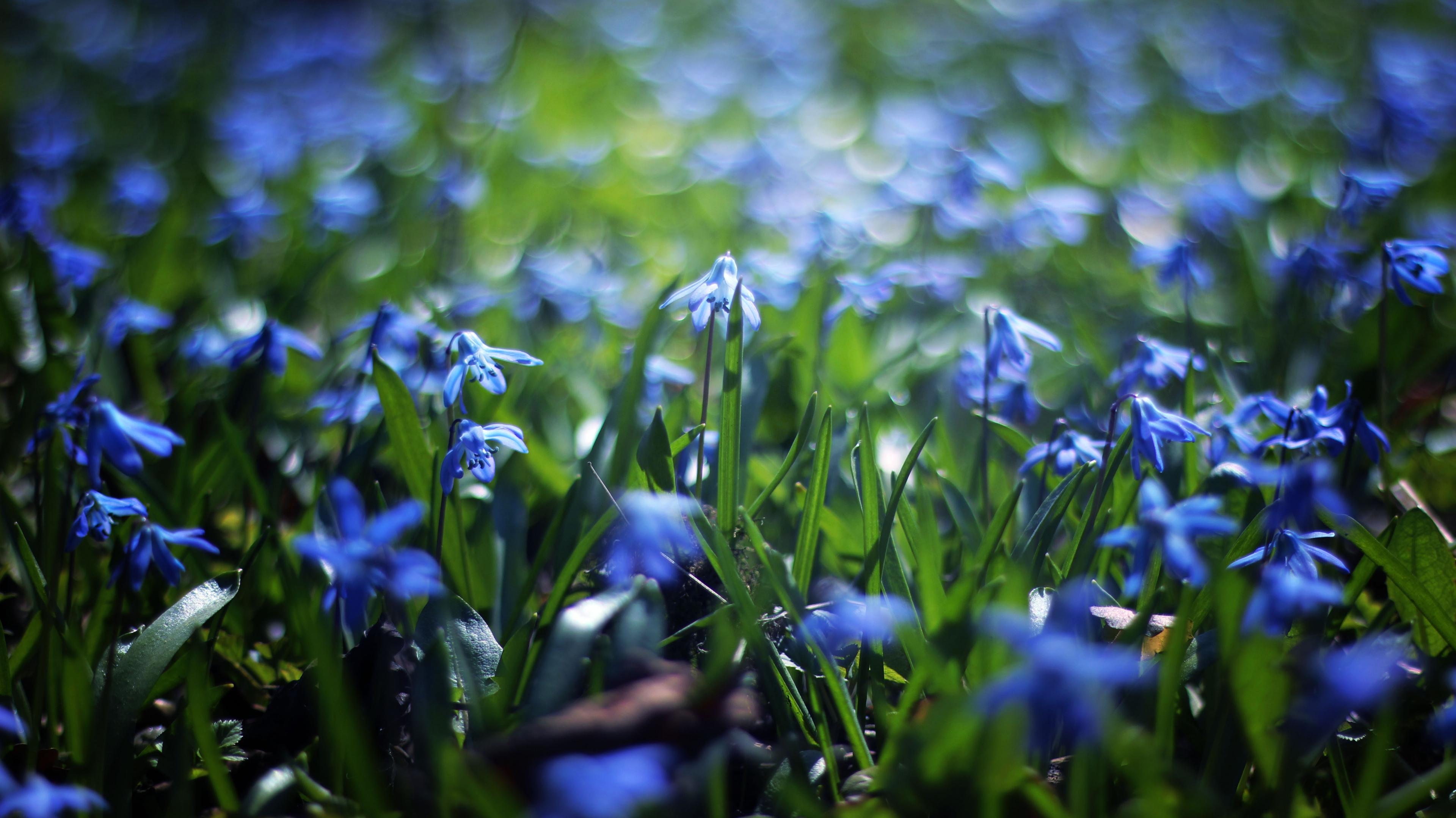 природа цветы синие трава nature flowers blue grass загрузить