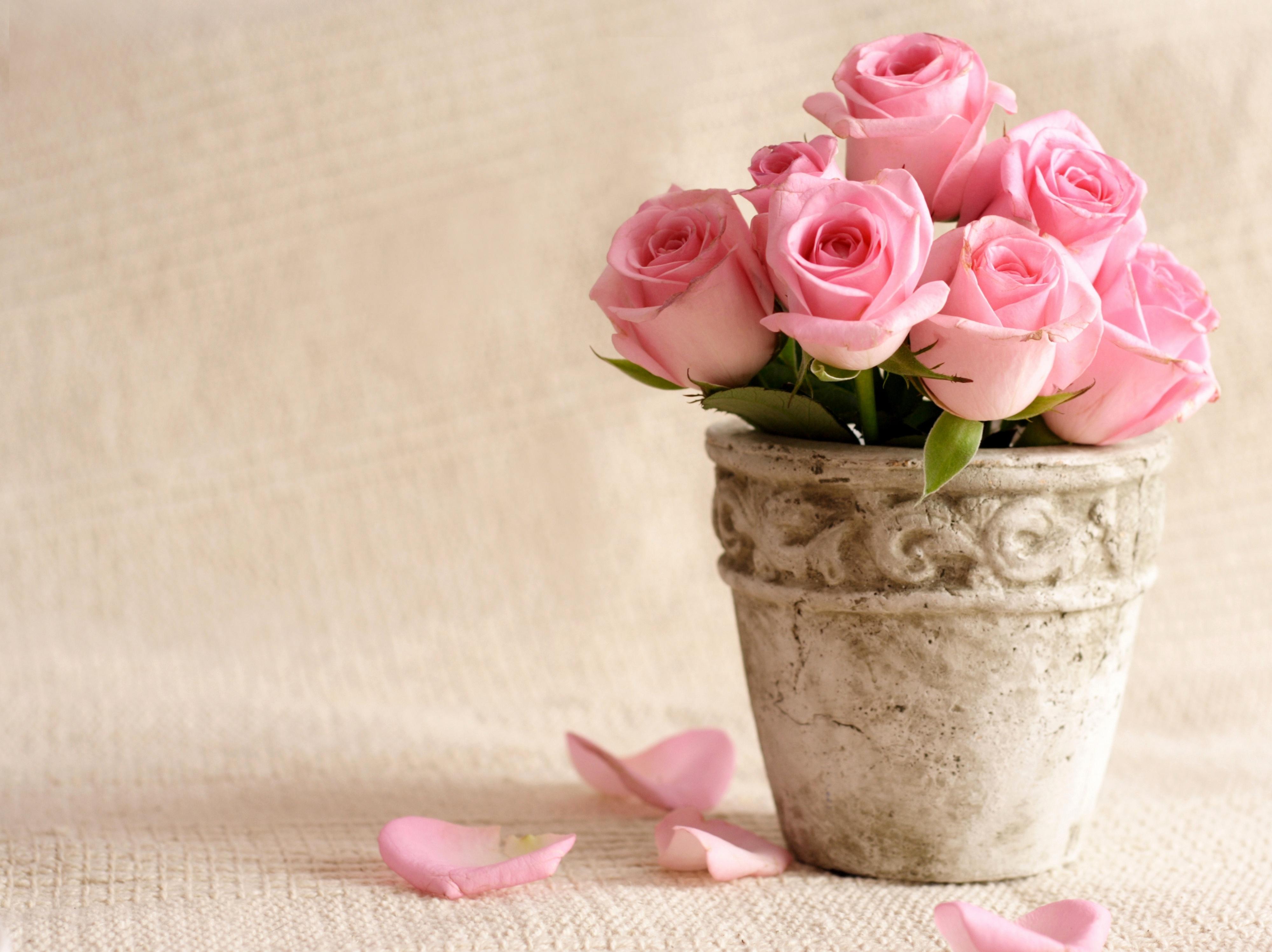 роза цветок загрузить