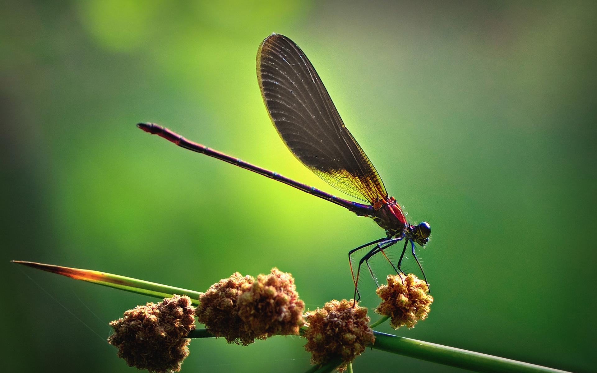 природа животные макро стрекоза трава бесплатно