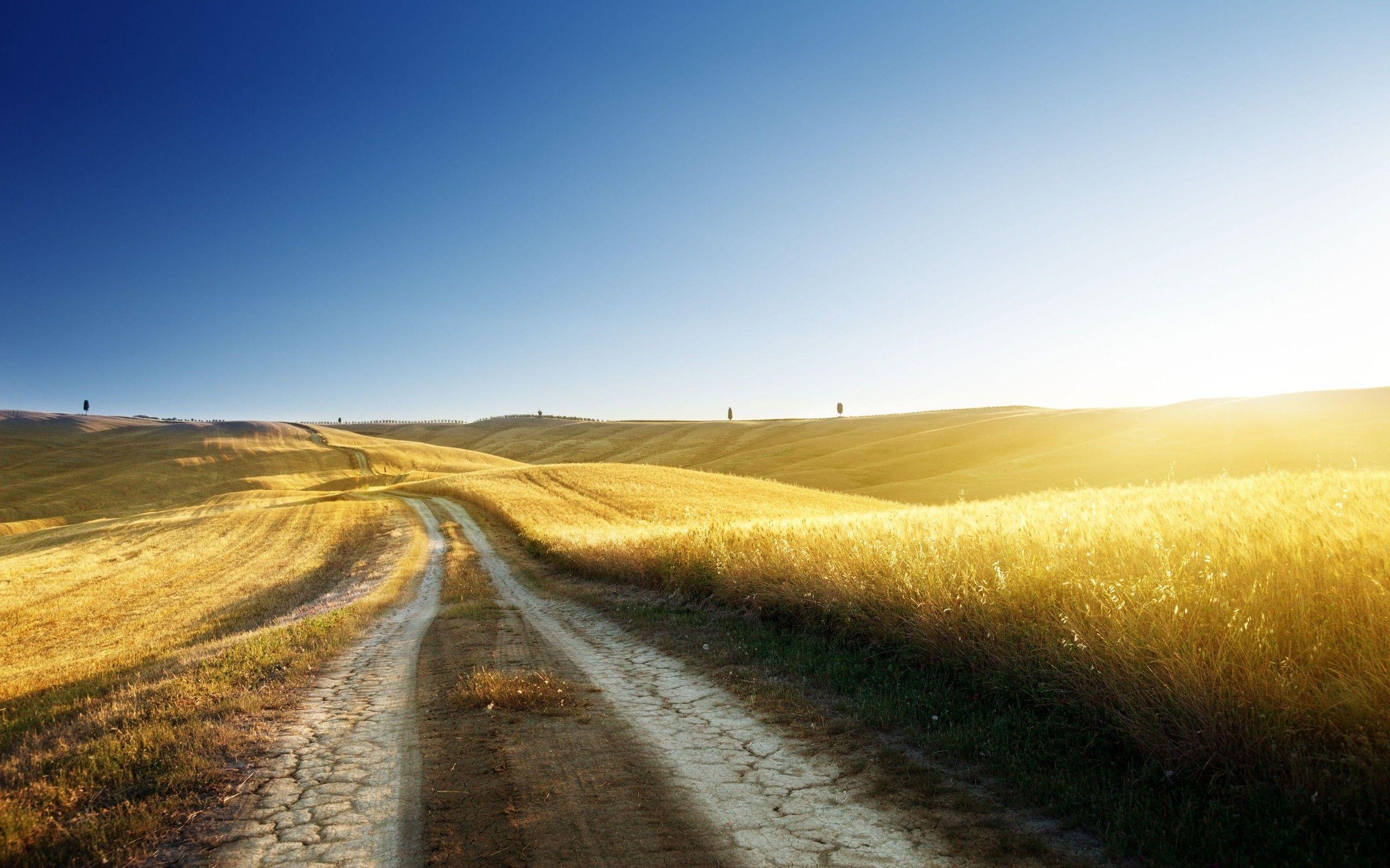 желто-зеленая дорога в степи  № 252719  скачать