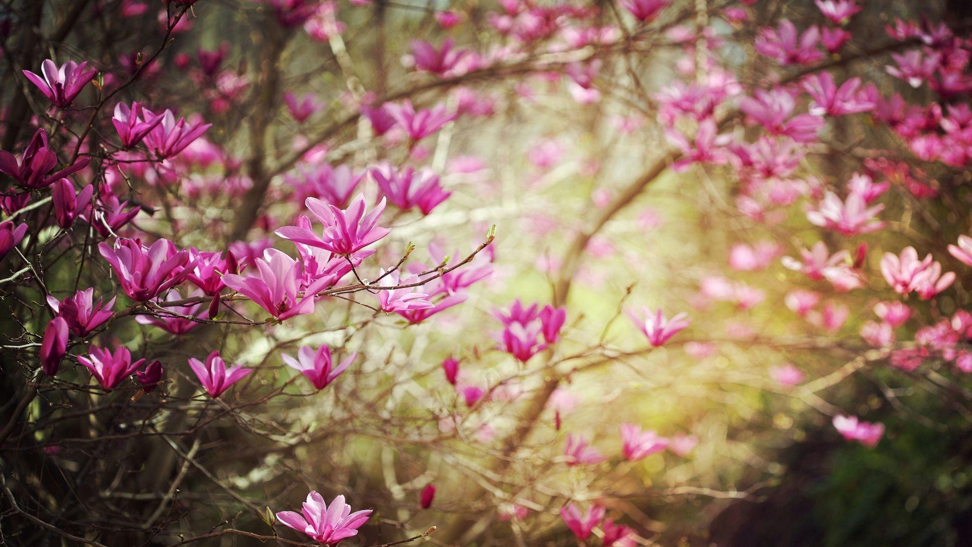 Дня прикольные, весна цветы картинки красивые